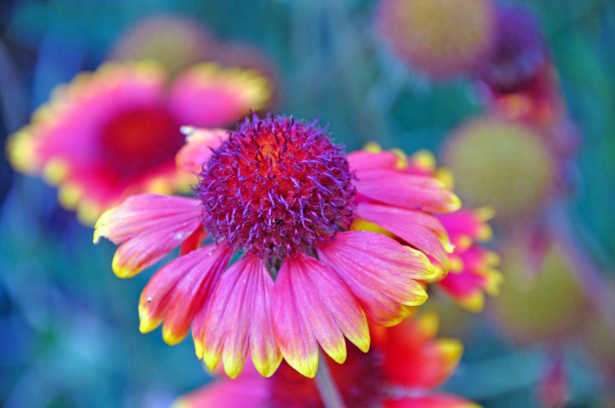 Flores del jardin by msalvadormunoz
