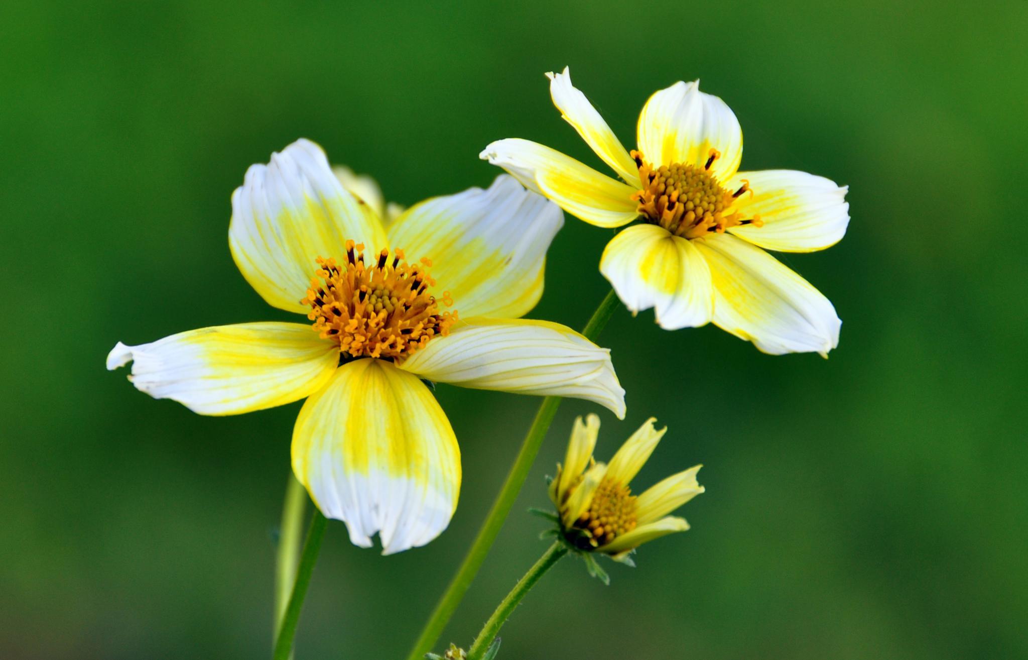 Flores de invierno... by msalvadormunoz