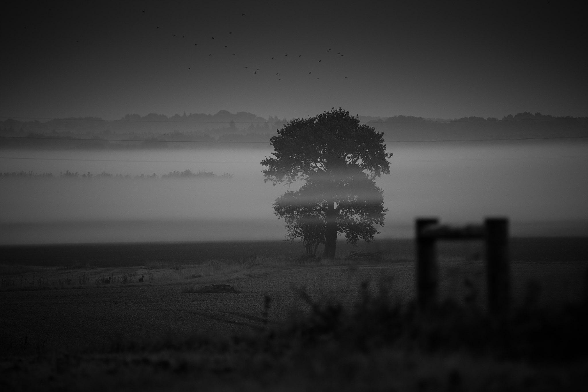 Through the mist by WellsyJay