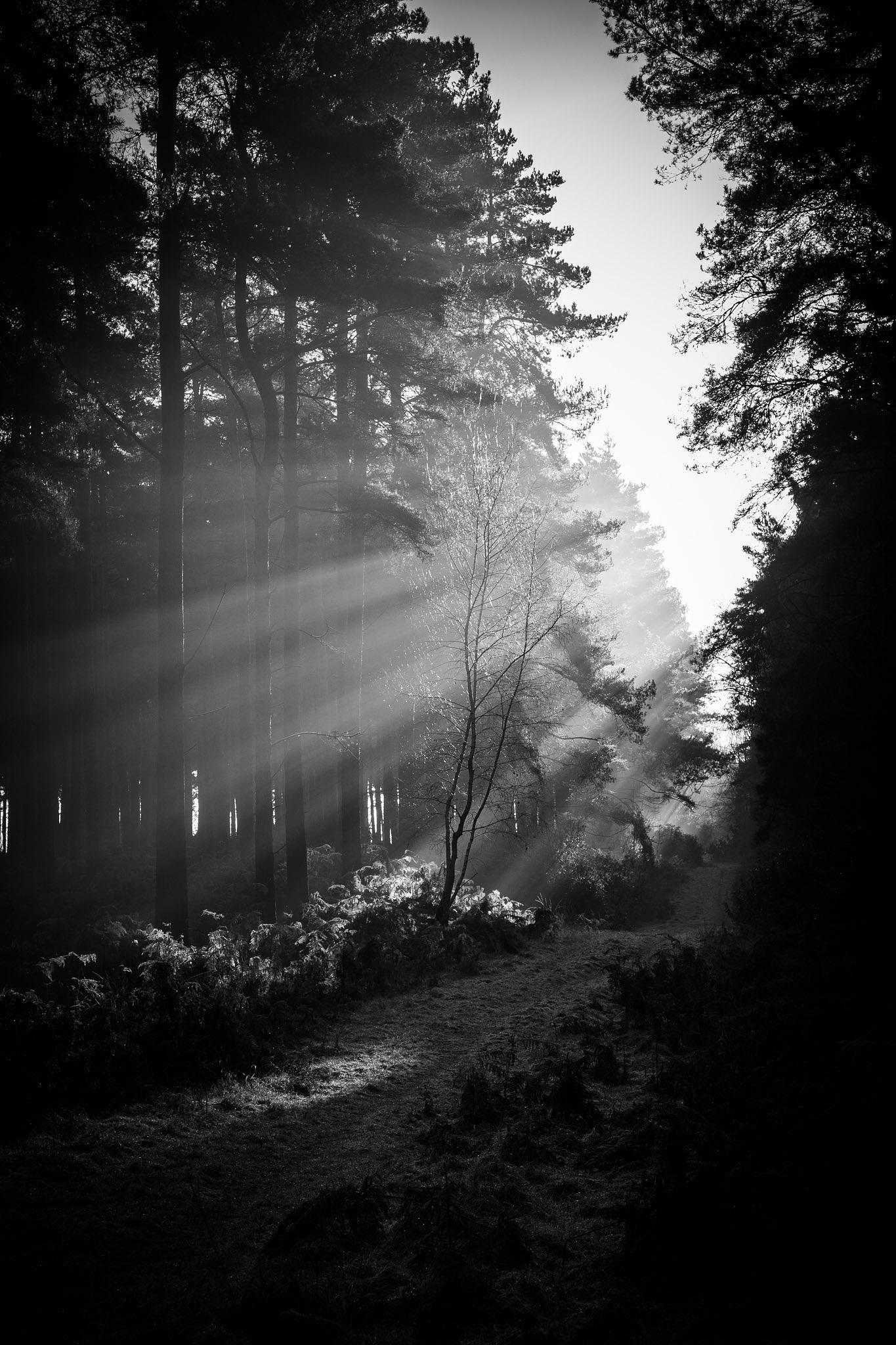 The enlightened path by WellsyJay