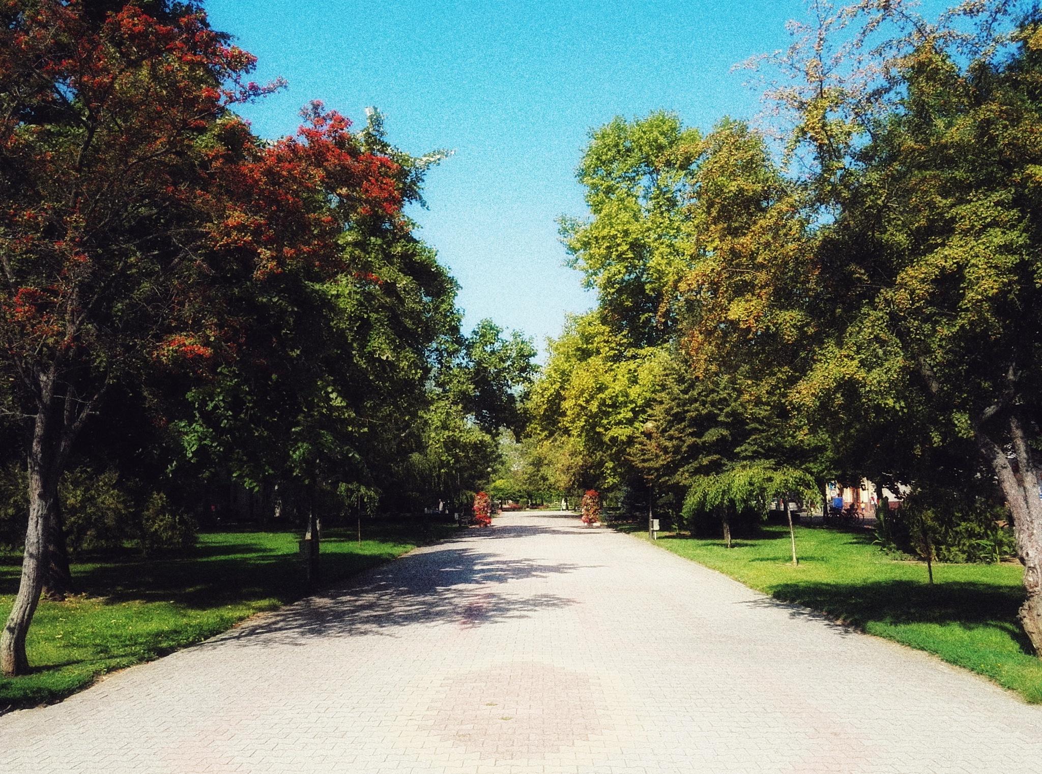 Town park by Balazs Kosaras