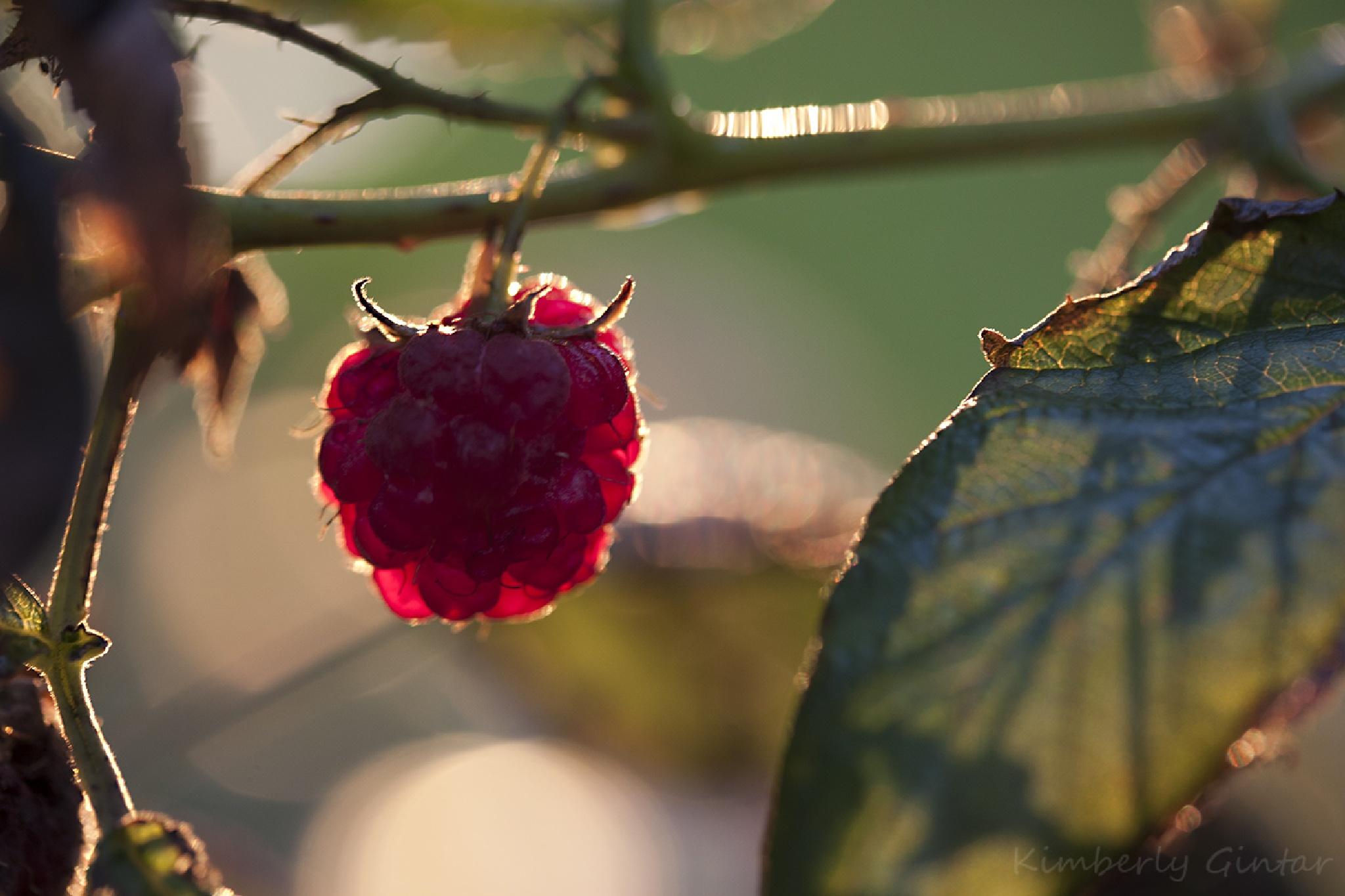 Raspberry by KimberlyGintar