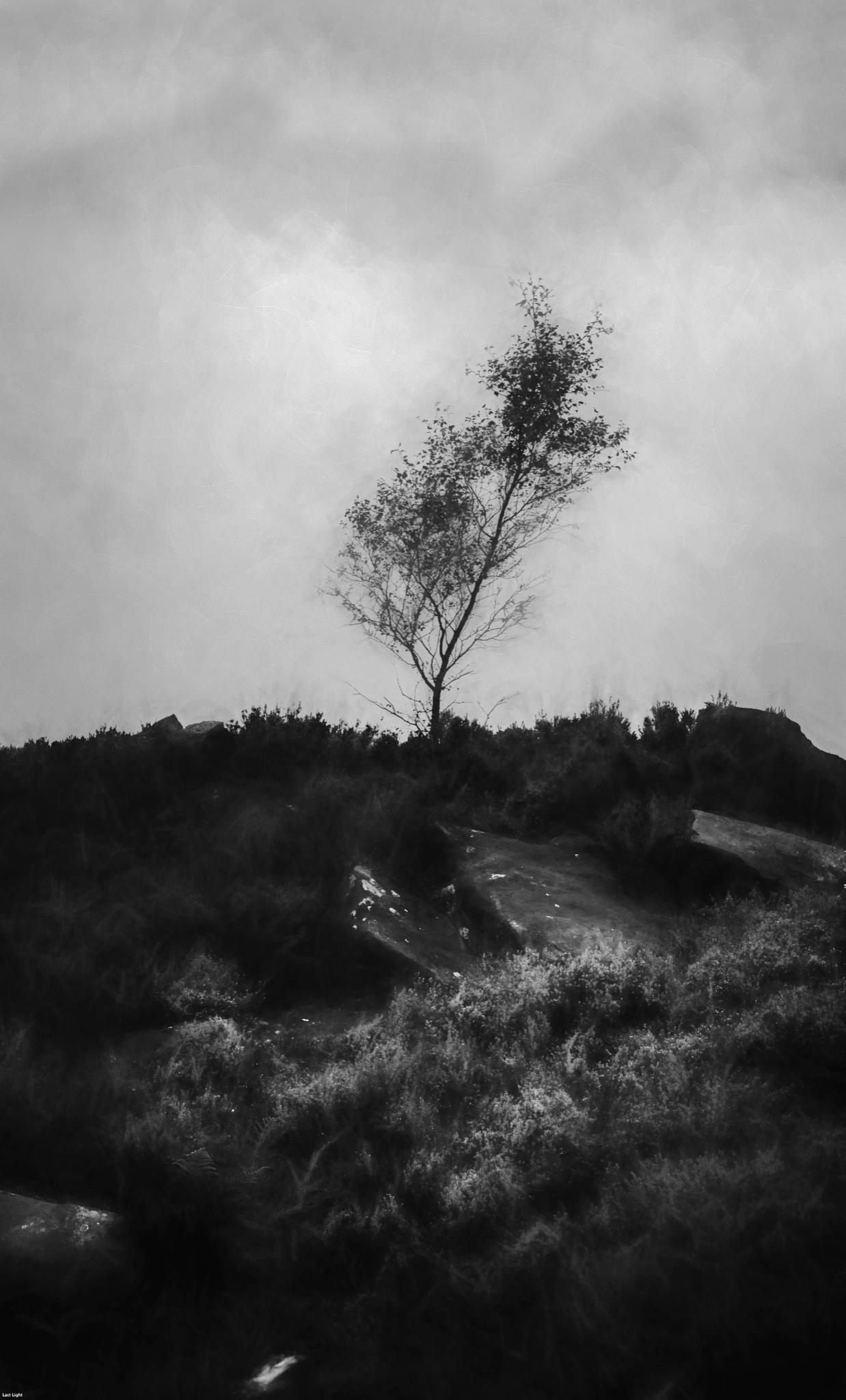 Sapling - Stone Edge by David Hawkes
