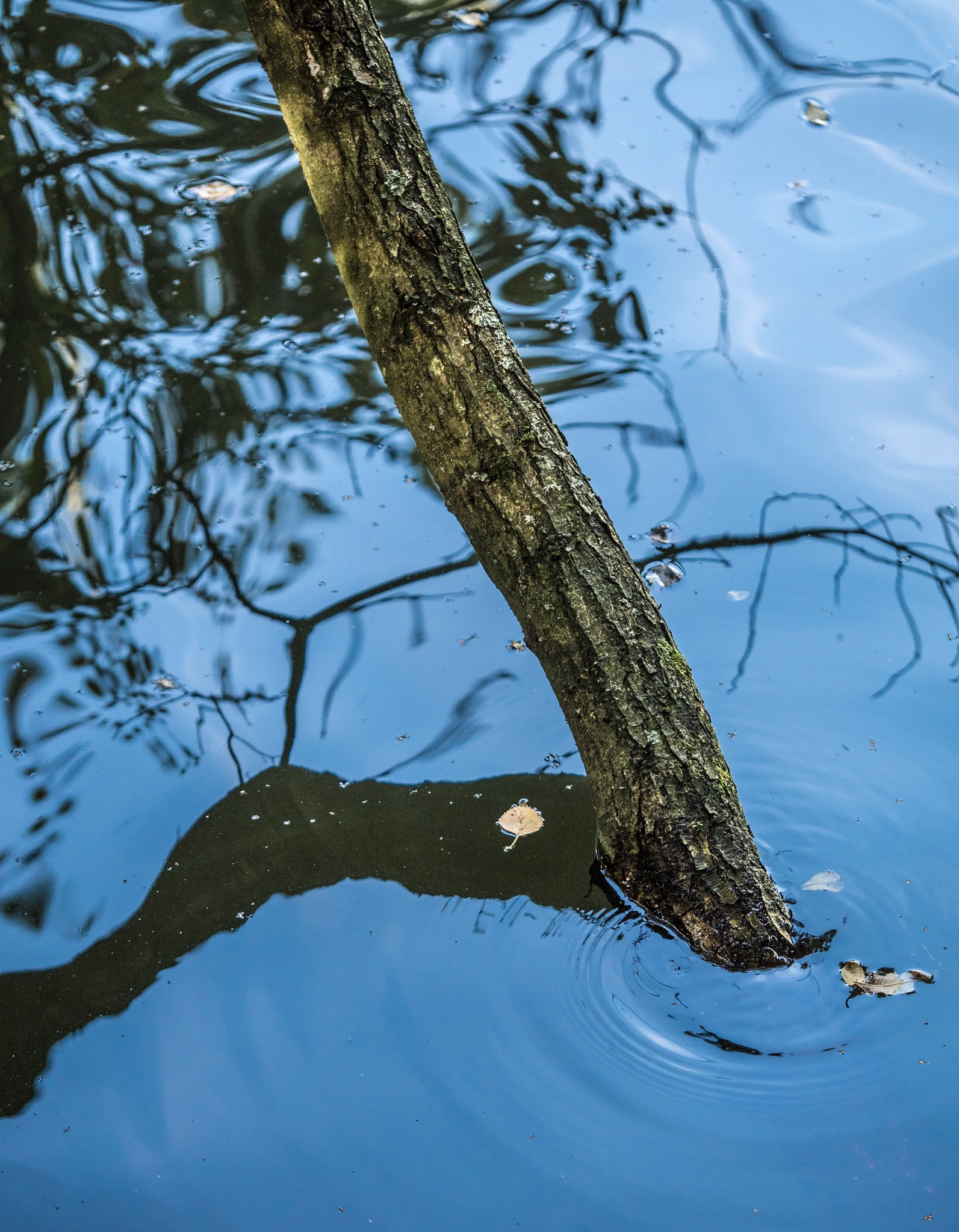Tree in the shallows by David Hawkes