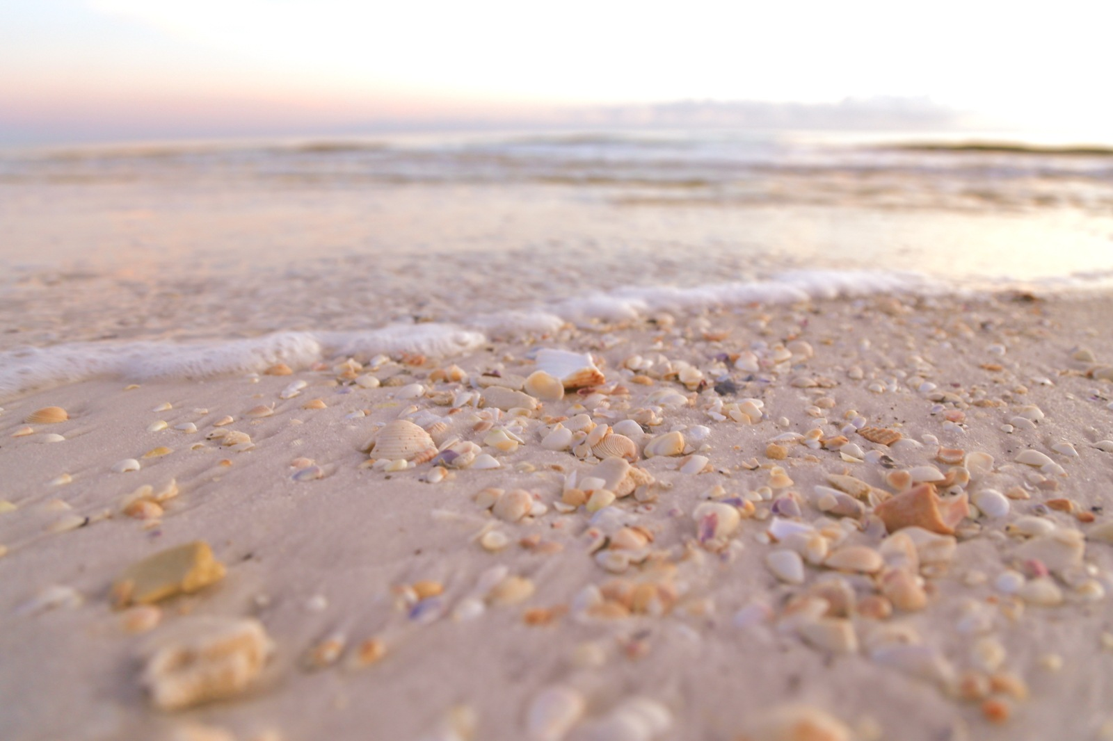 shells on the beach by juststaycom