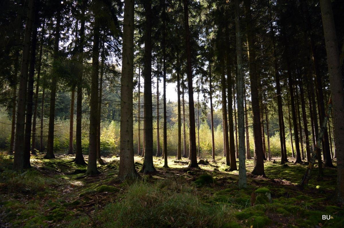 forest by Boris Urmin