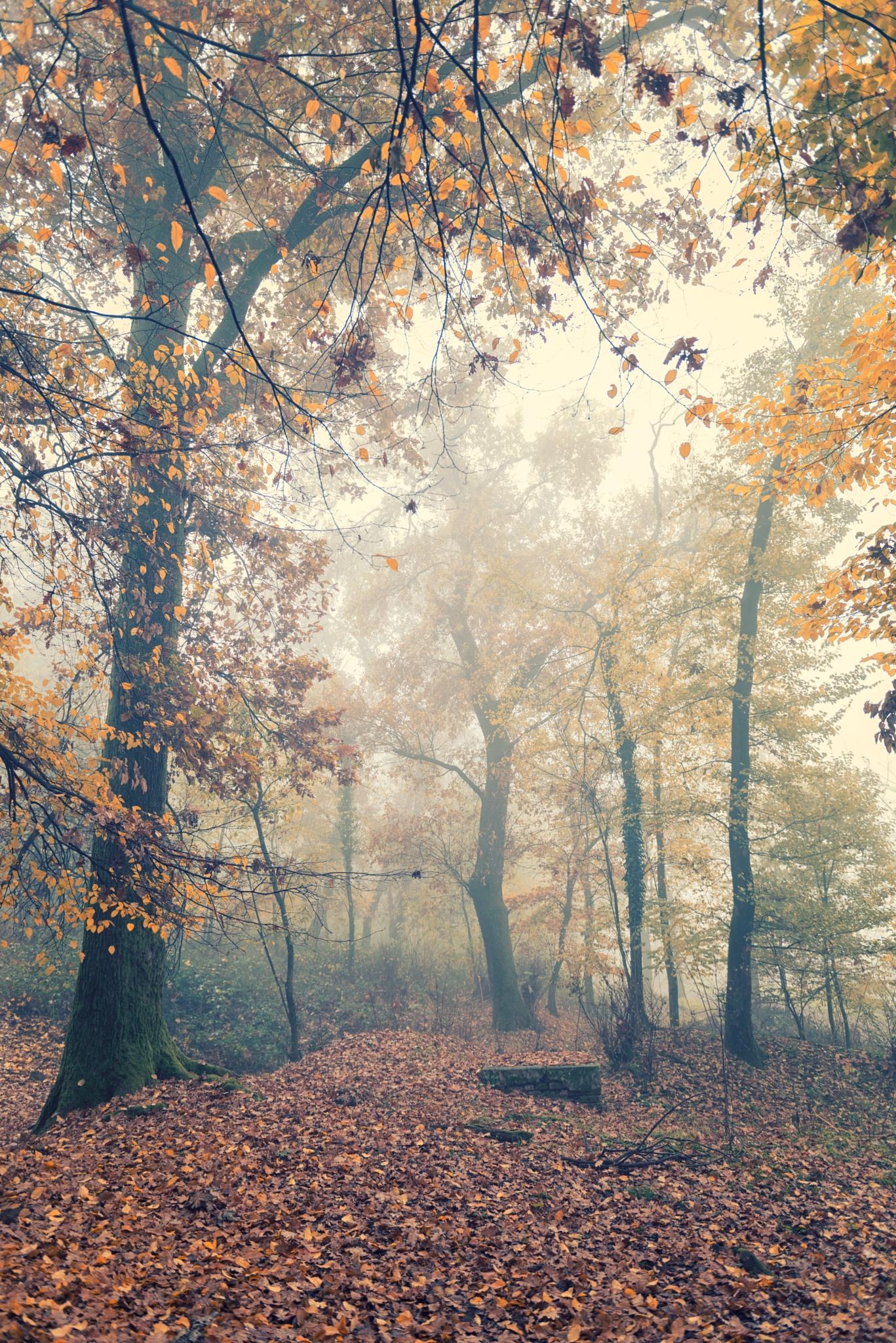 Autumn fog by GiordanoAita