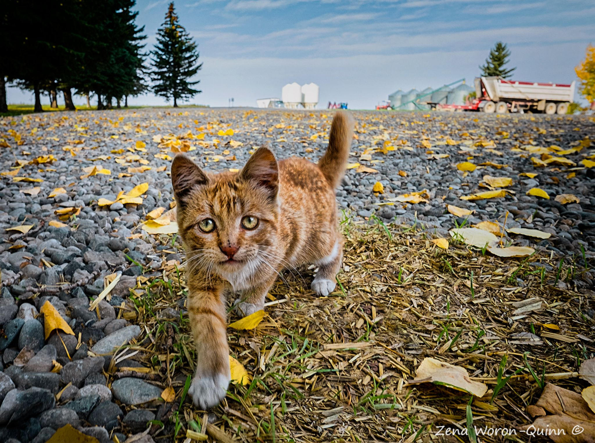 Farm Kitten by zwqphotos