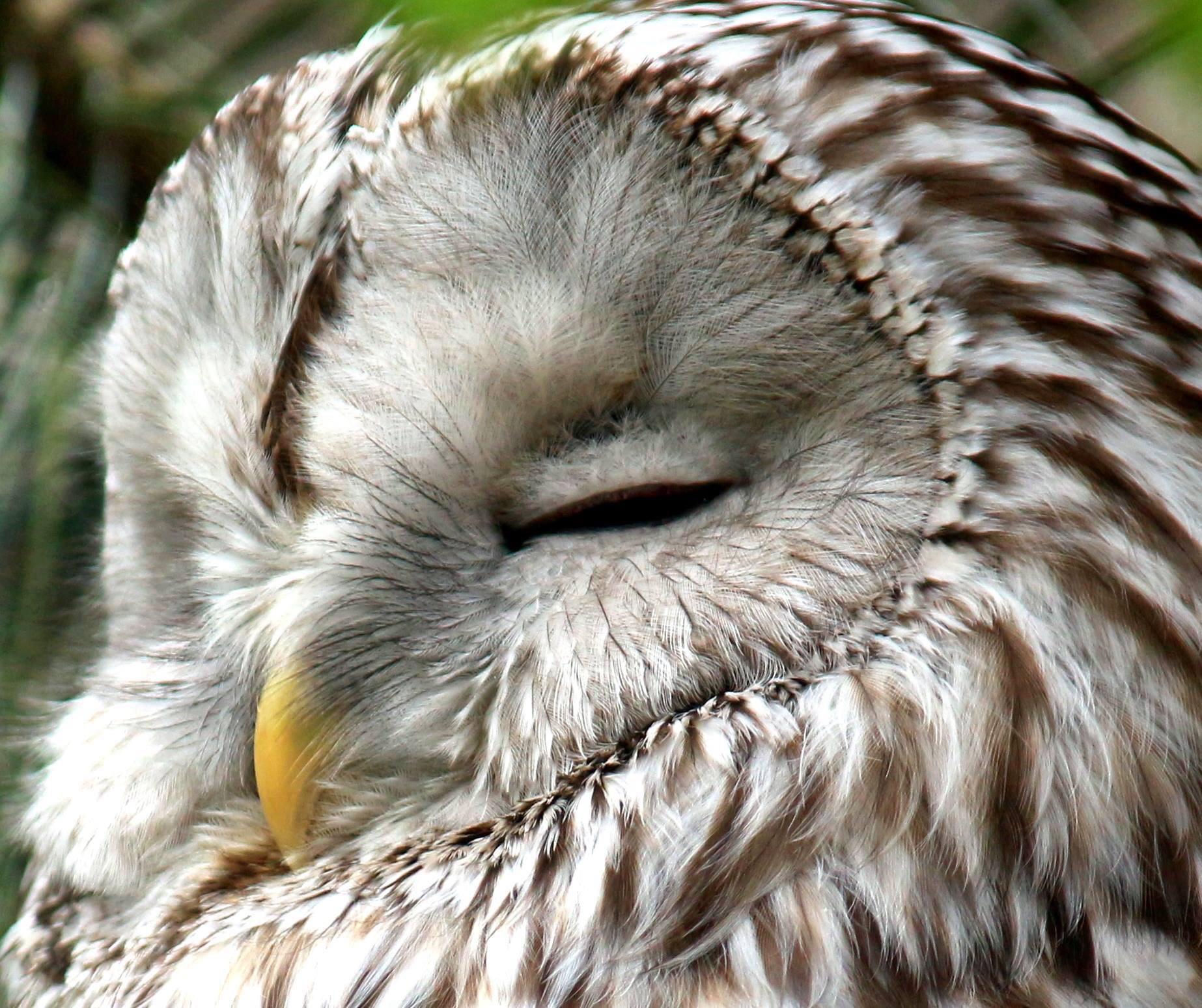 Uran Owl  by Marf
