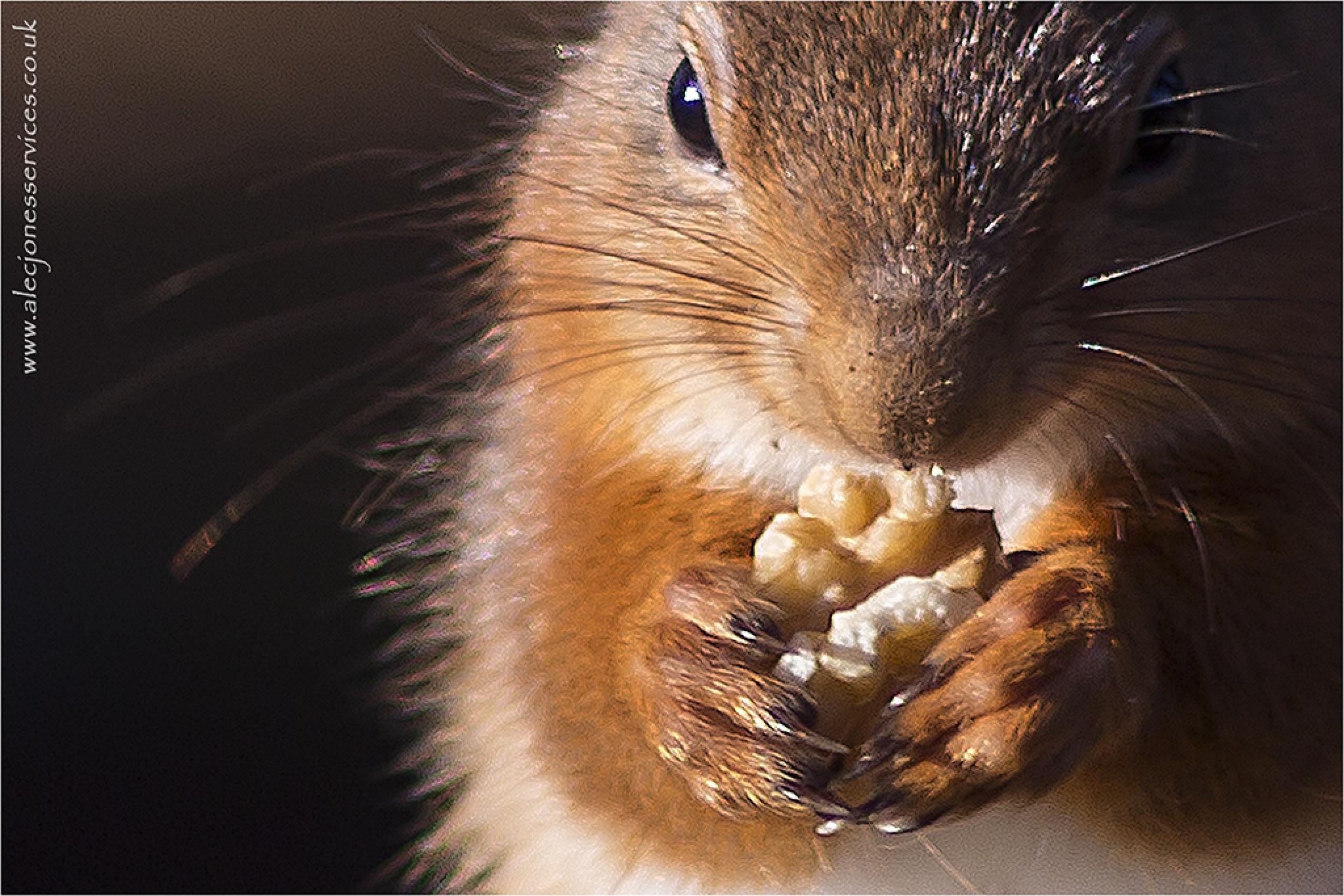 Just add nuts by AlecJones