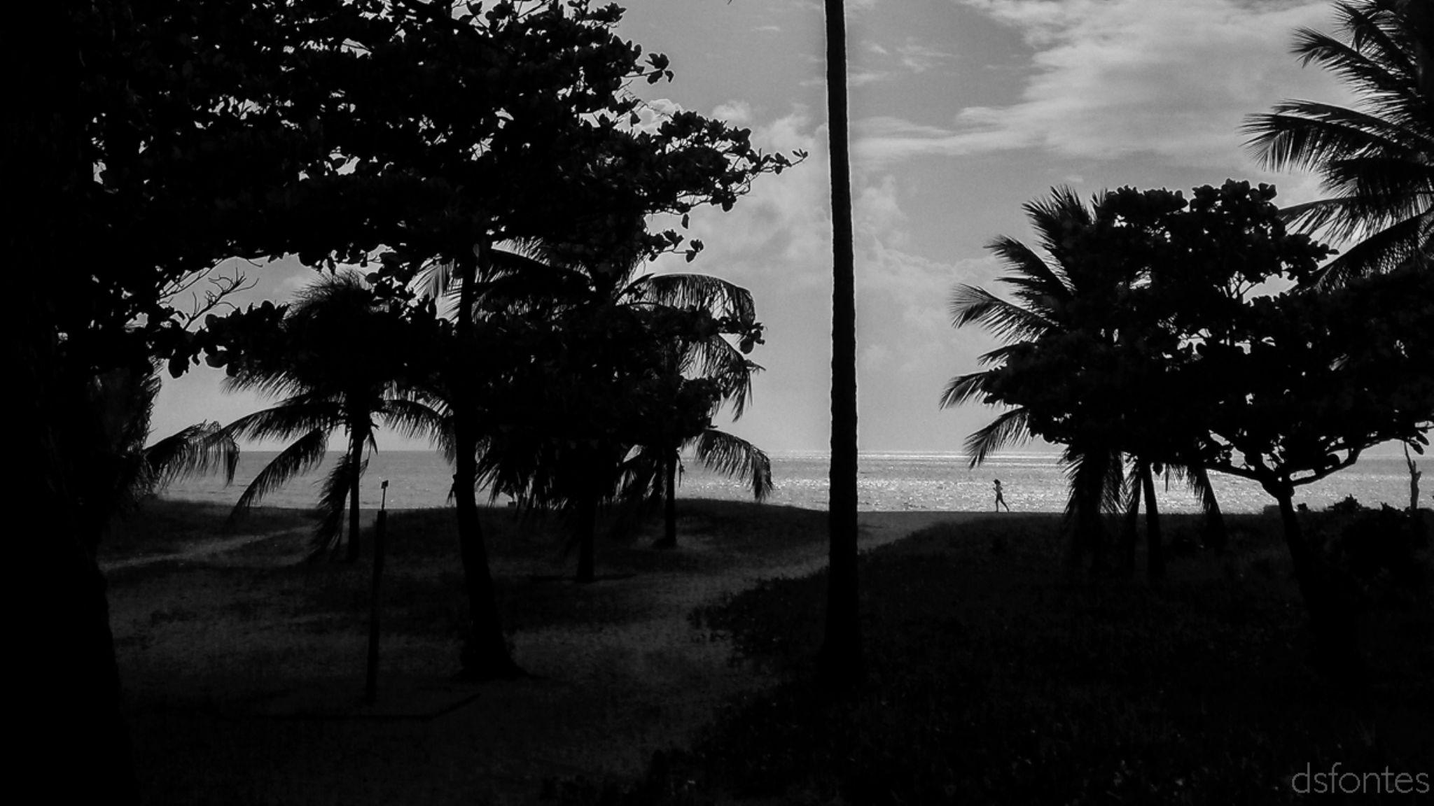 Beach in João Pessoa city by Doris Fontes