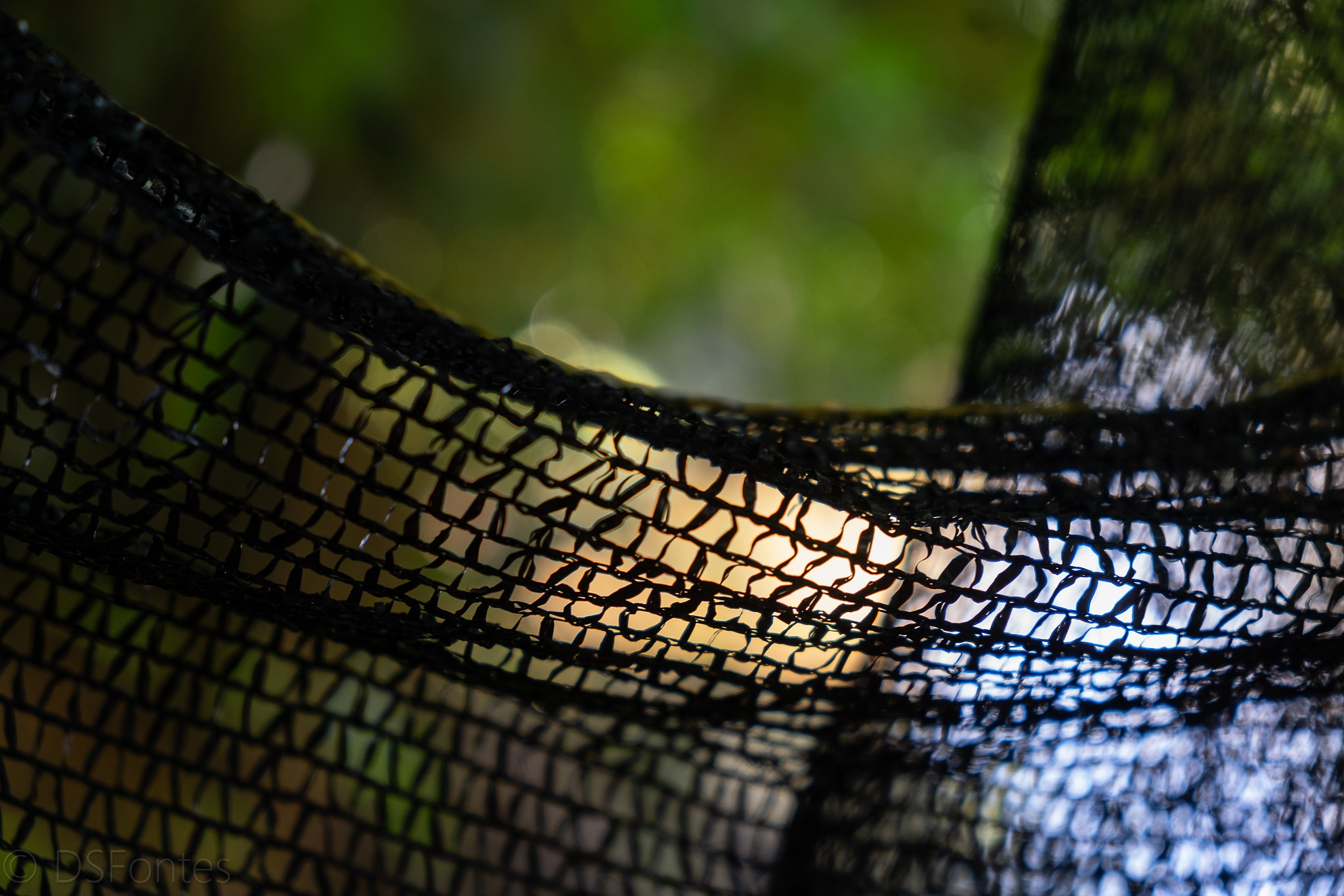 Not a fishing net, but a net anyway by Doris Fontes