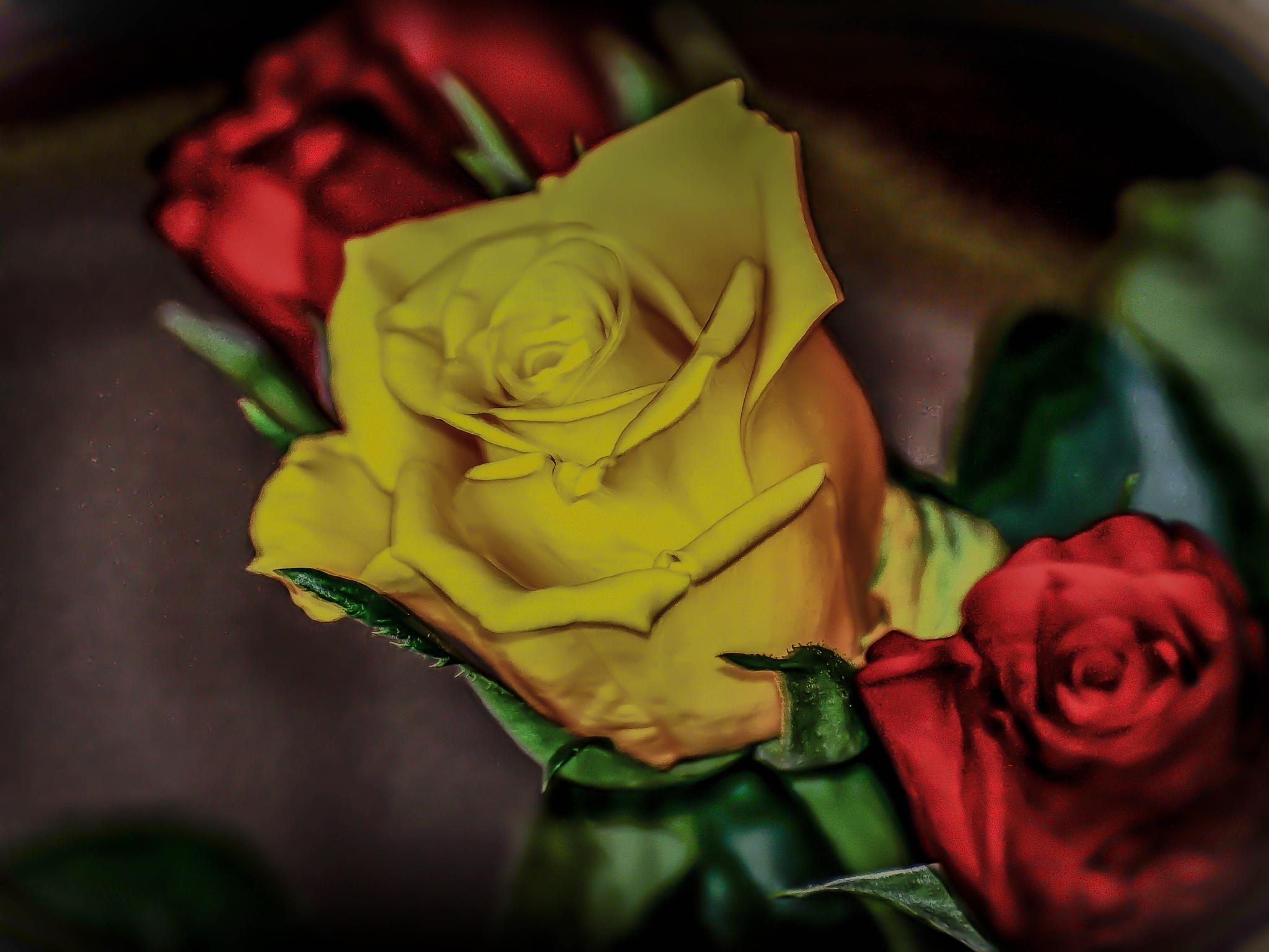 Beatifull yellow rose by ilseBodewes