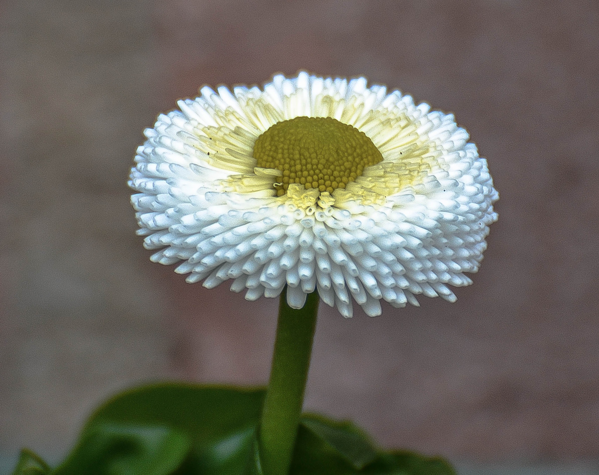 White flower in the garden. (No macro) by ilseBodewes