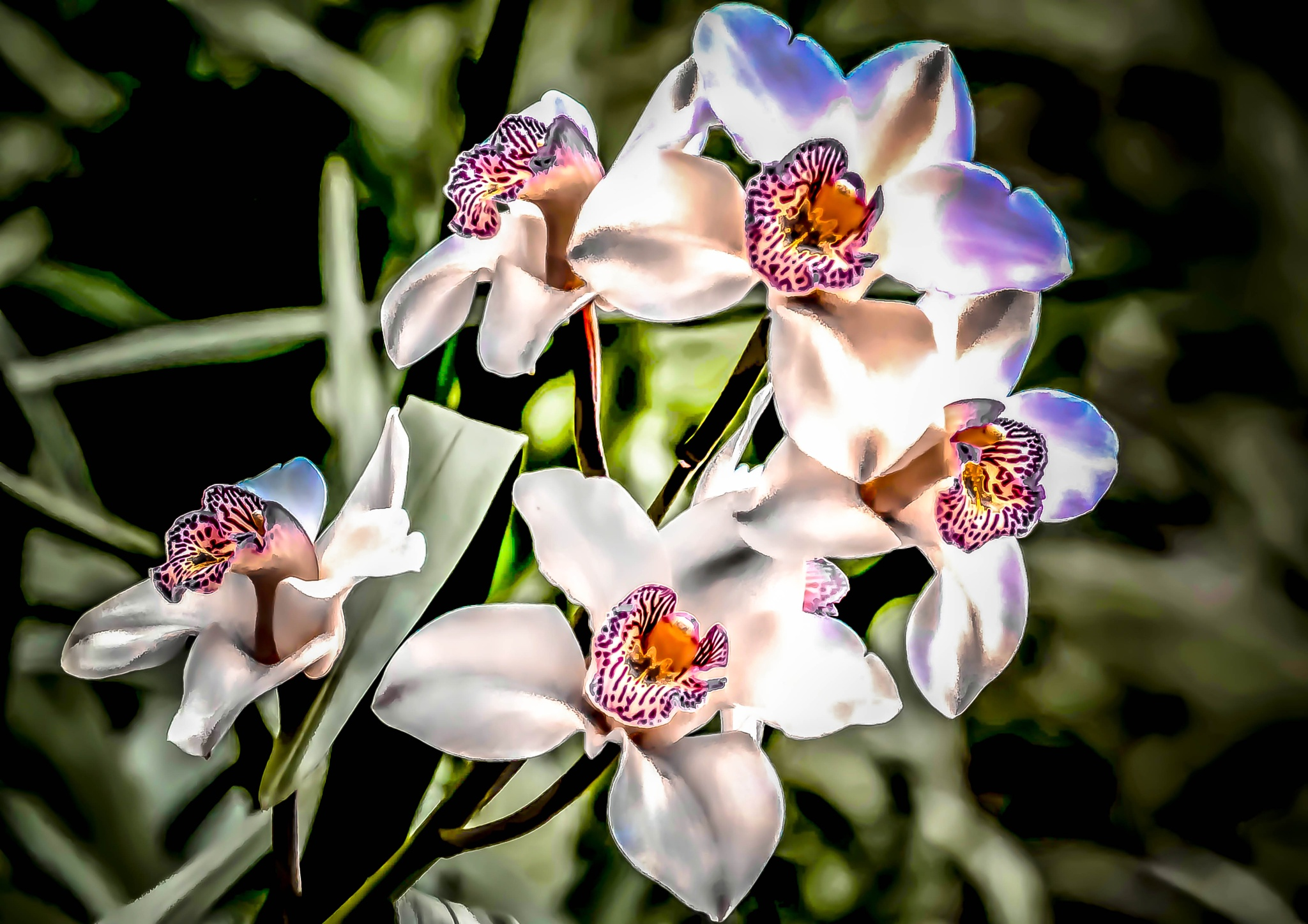 My wonderfull orchid by ilseBodewes