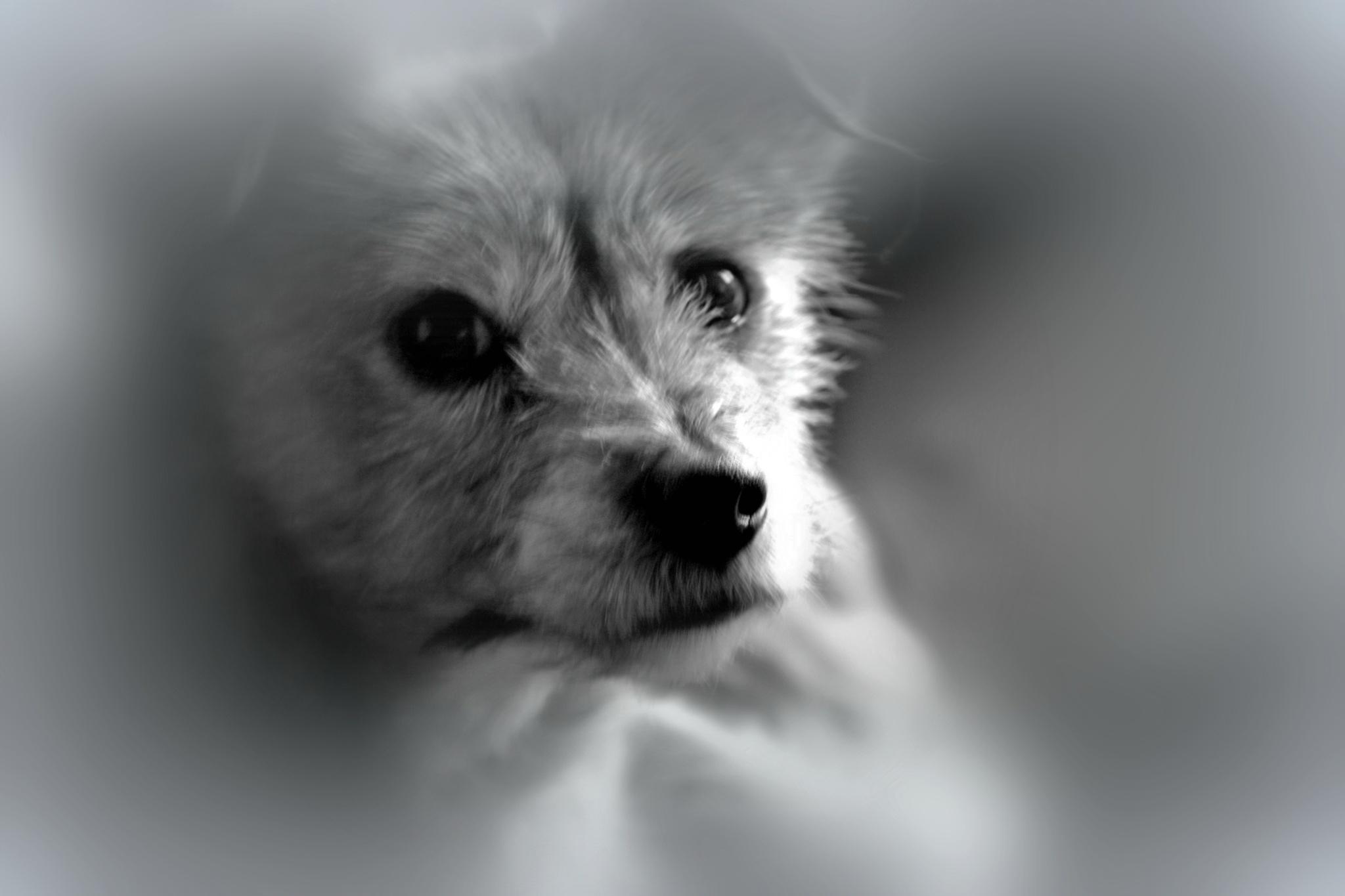 My doggie Quinsie by ilseBodewes