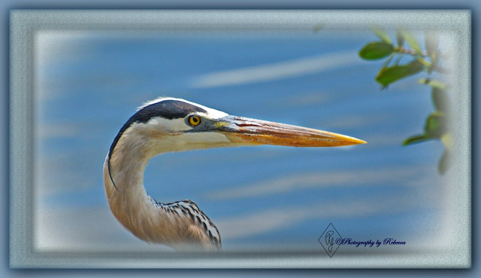 Up close and personal after he ate the fish by Rebecca J.
