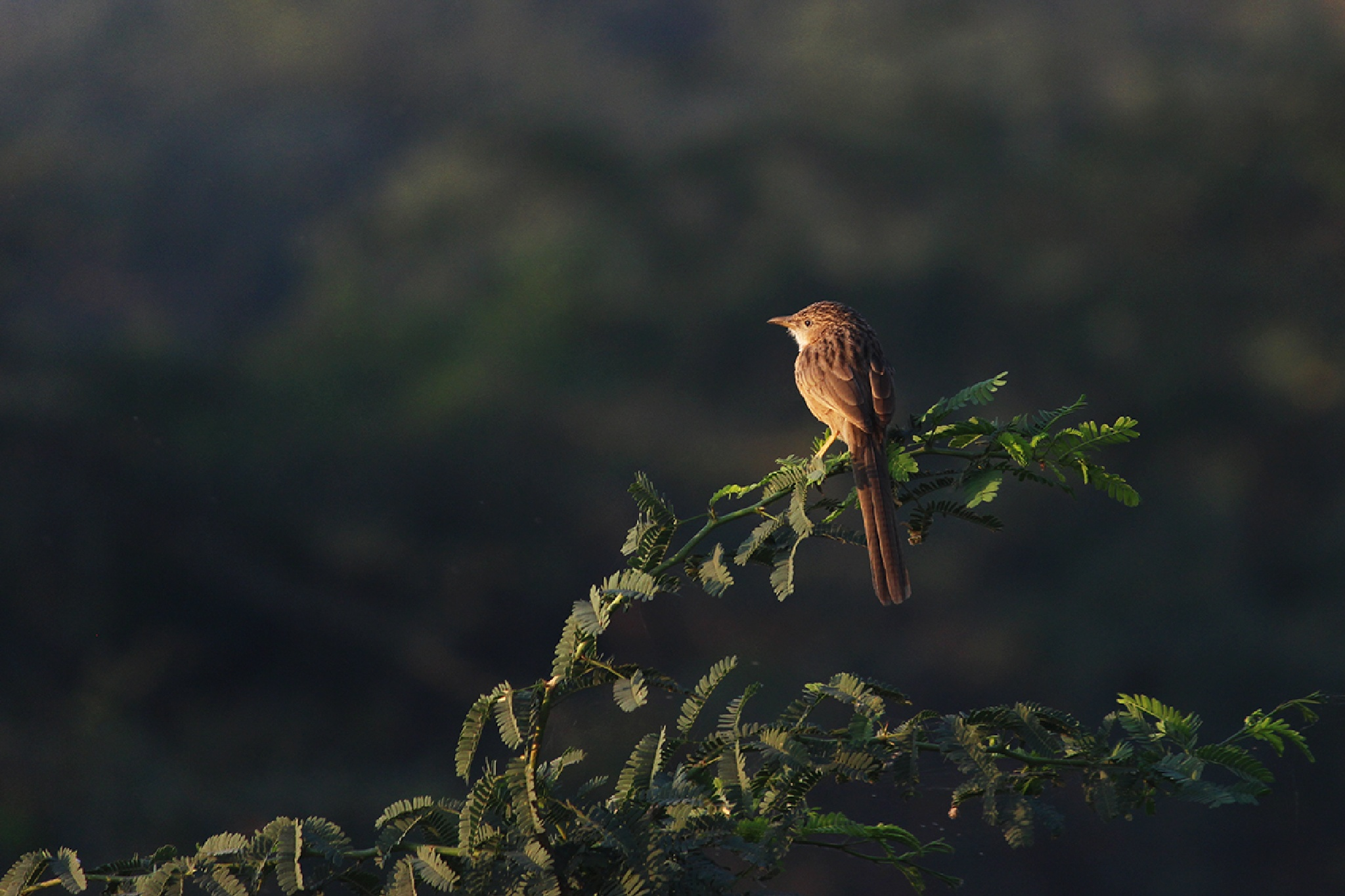 common bubler - ahmedabad by dipakmarfatia
