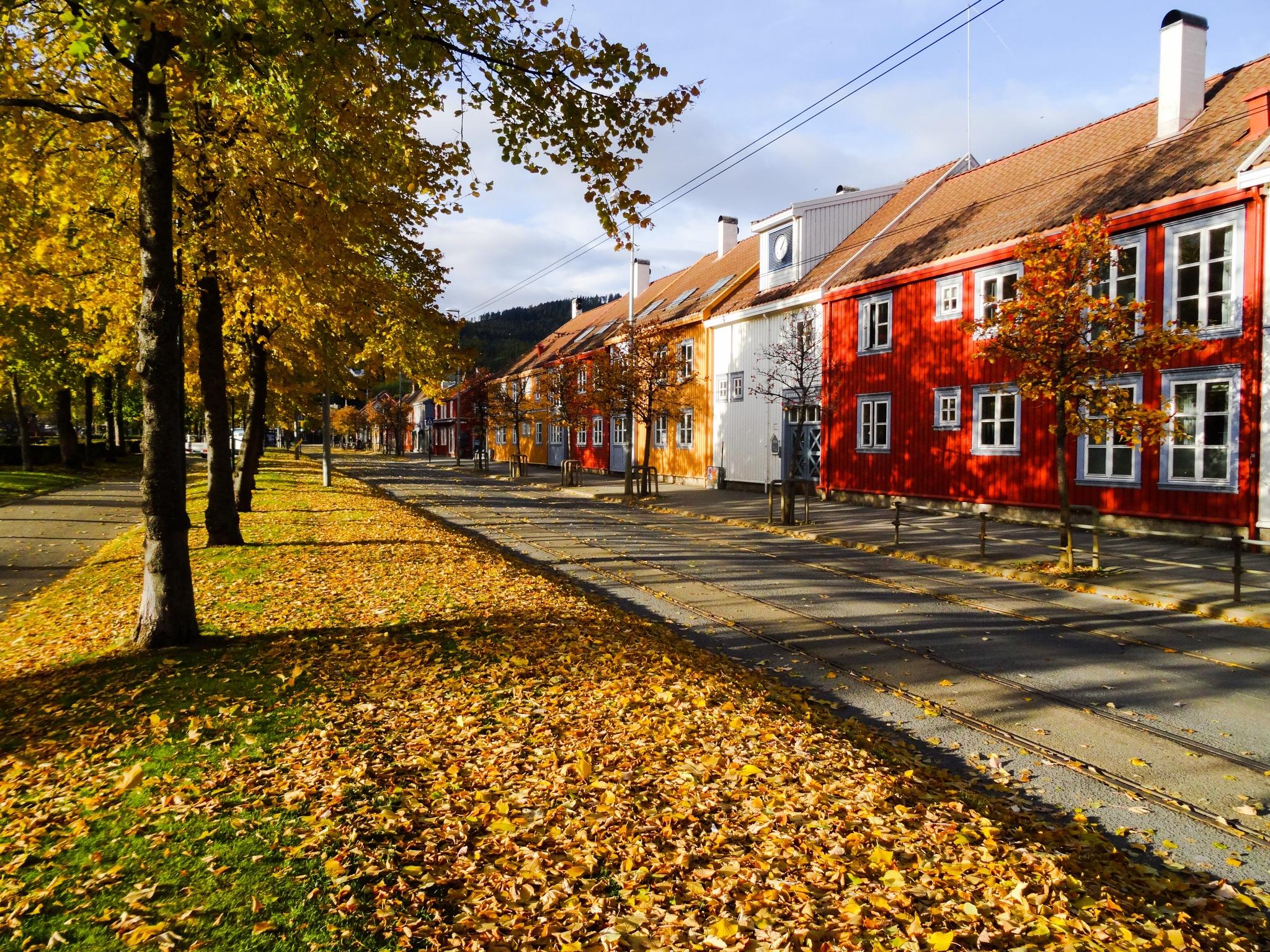 Autumn in Trondheim by luciestarup
