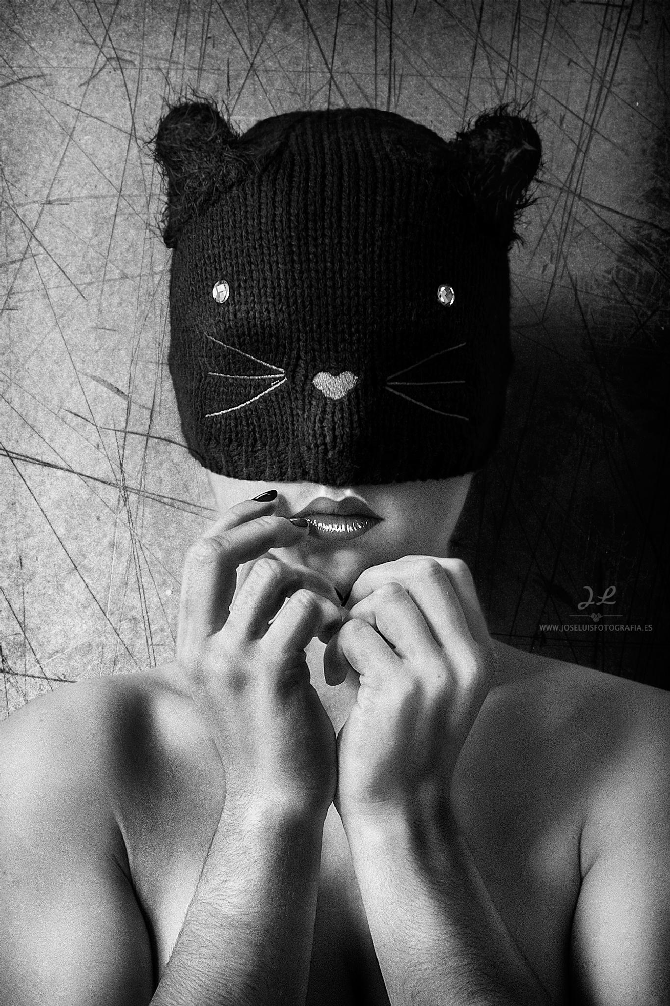 Kitten by José Luis