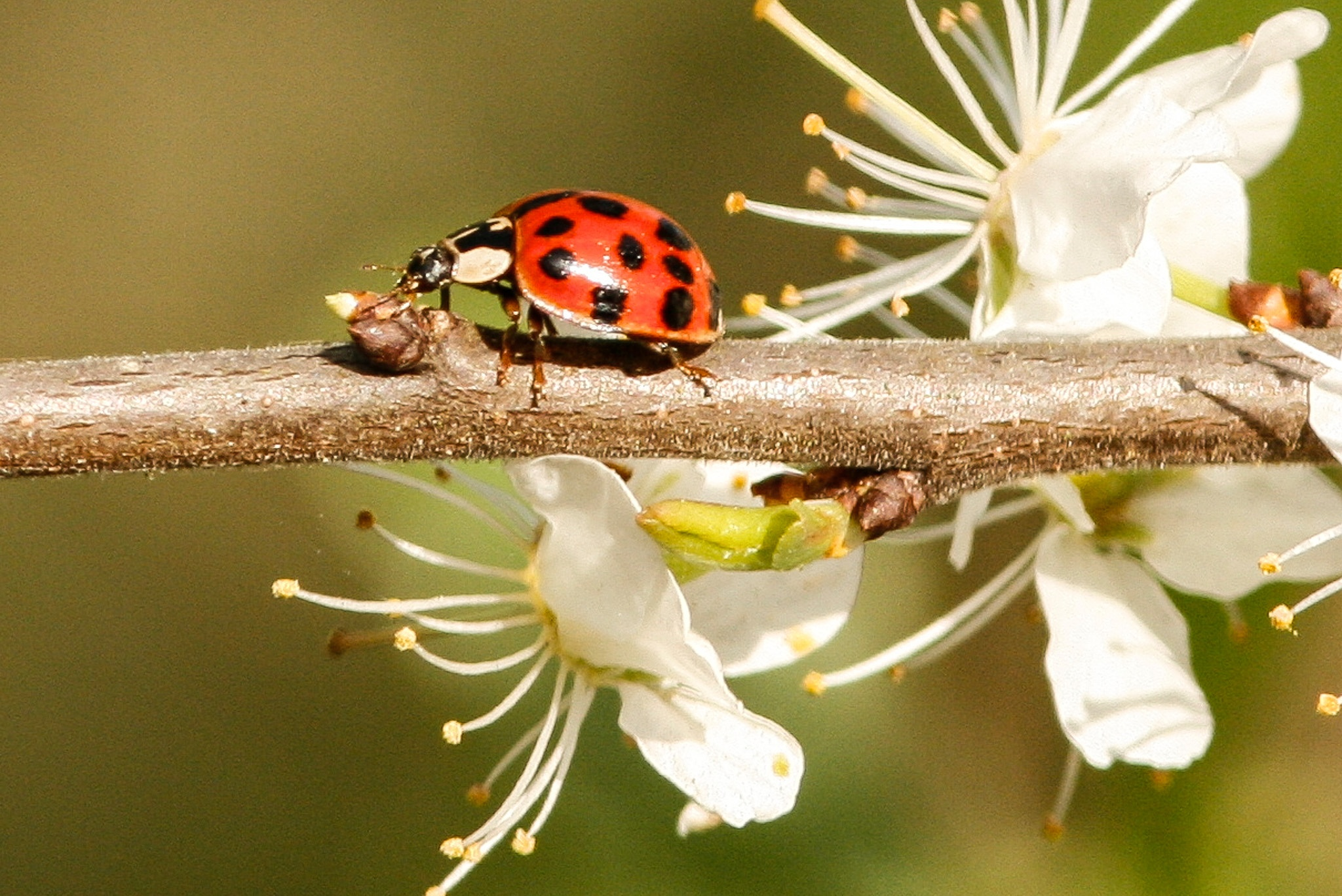 Ladybird by Paul Brown