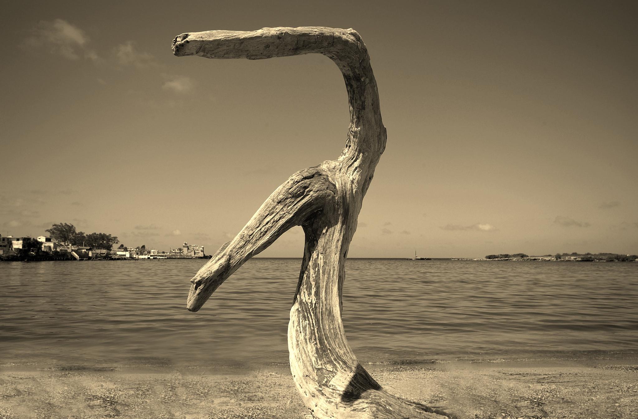 wreckage wood by alaindewint
