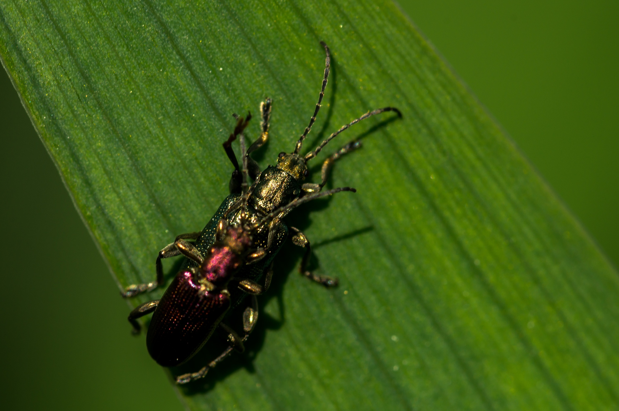 Bugs on the leaf by Hintermann