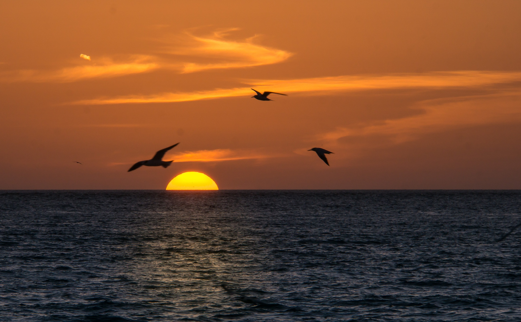Key West Sunset by Suzanne