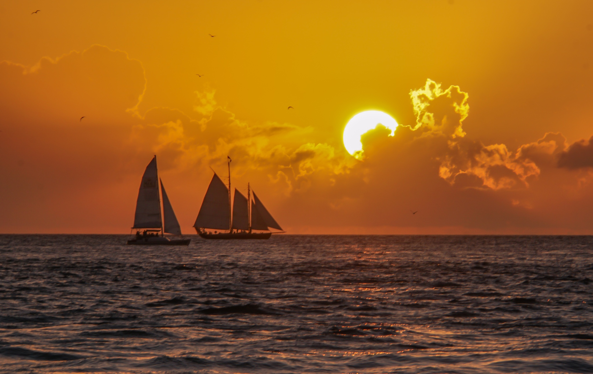 """""""Red Sails in the Sunset"""" by Suzanne"""
