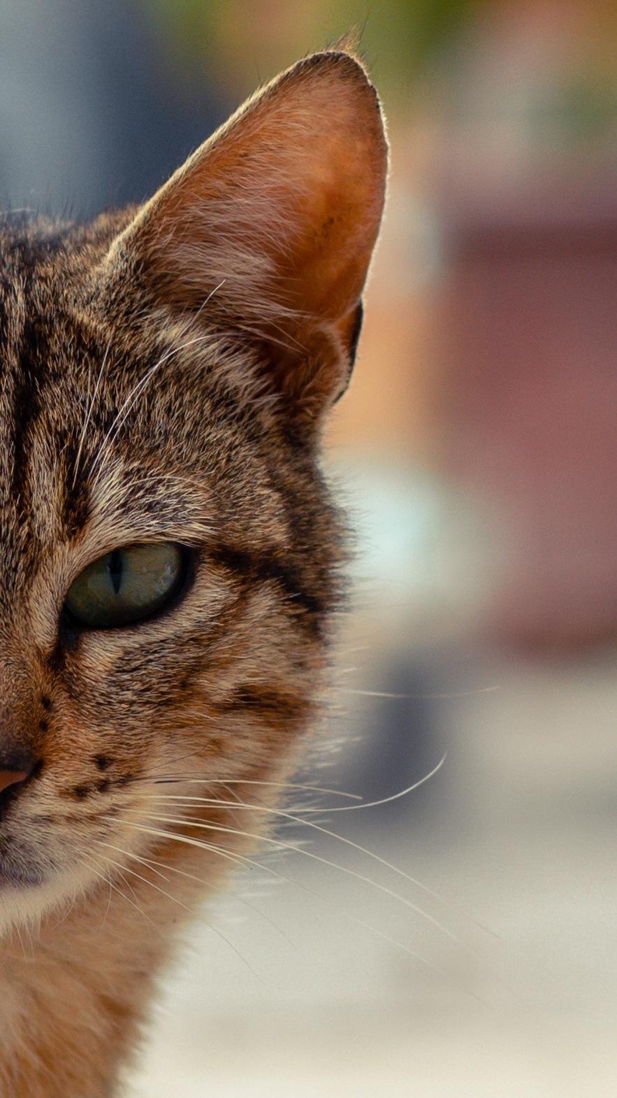 cat by Mohamed Adel