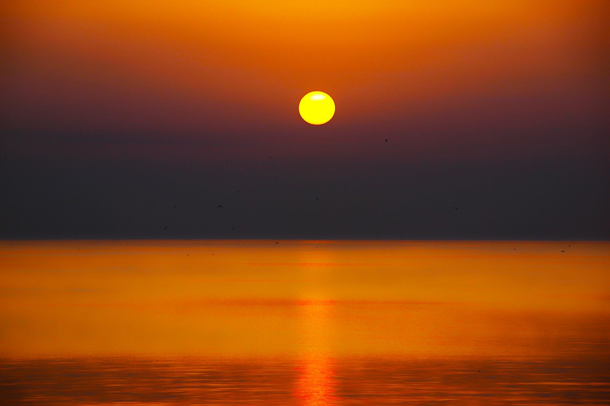 Photo in Landscape #sunset #sunrise #landscape #horizon #art #art foto #art photo #art photography #qatif