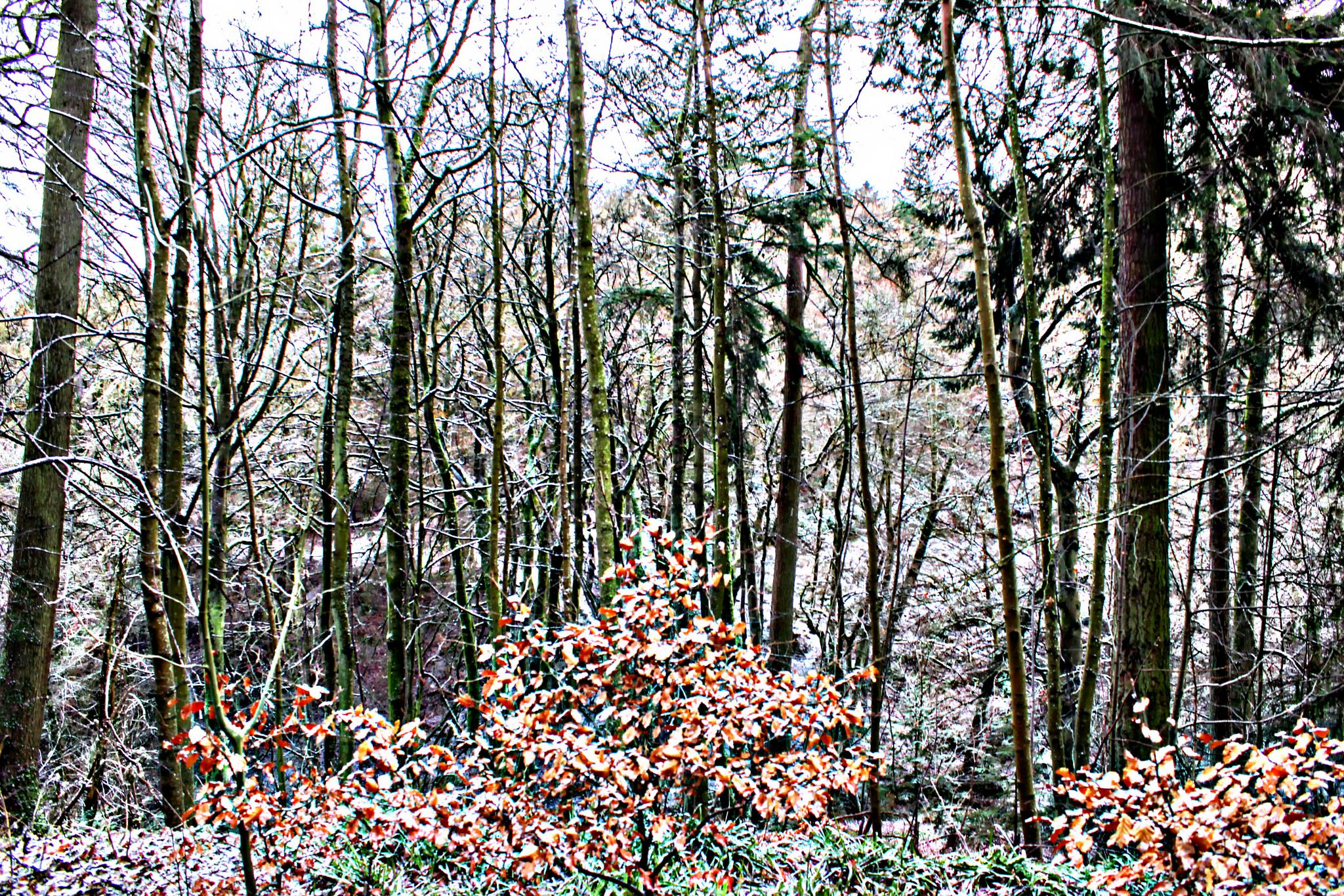 Forest by Joaquim Ribeiro