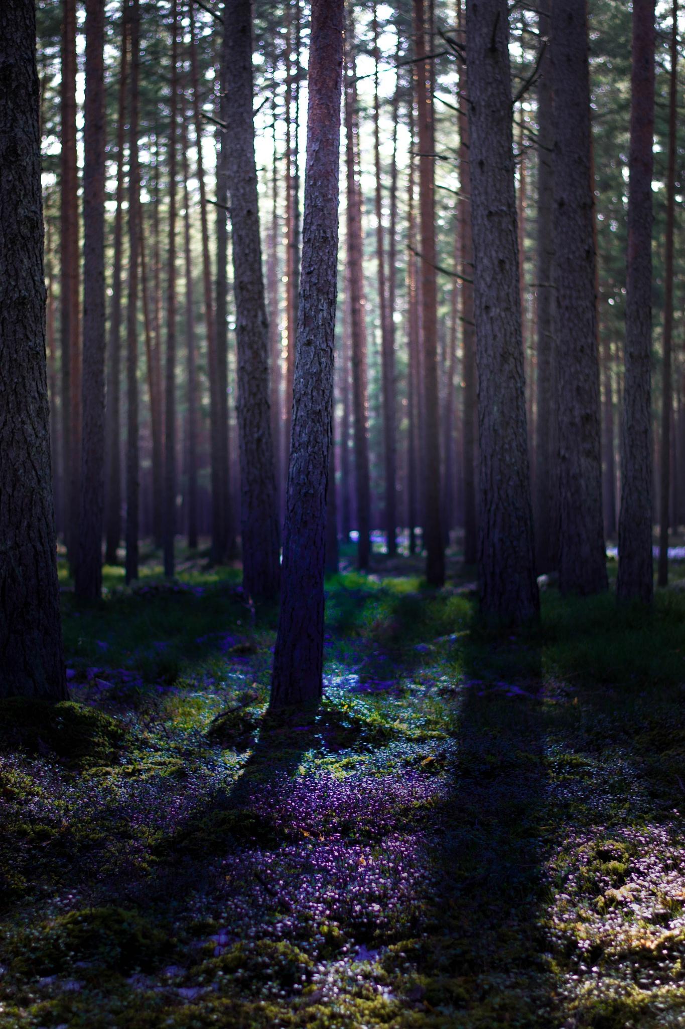 Dark forest by LindabyLinda