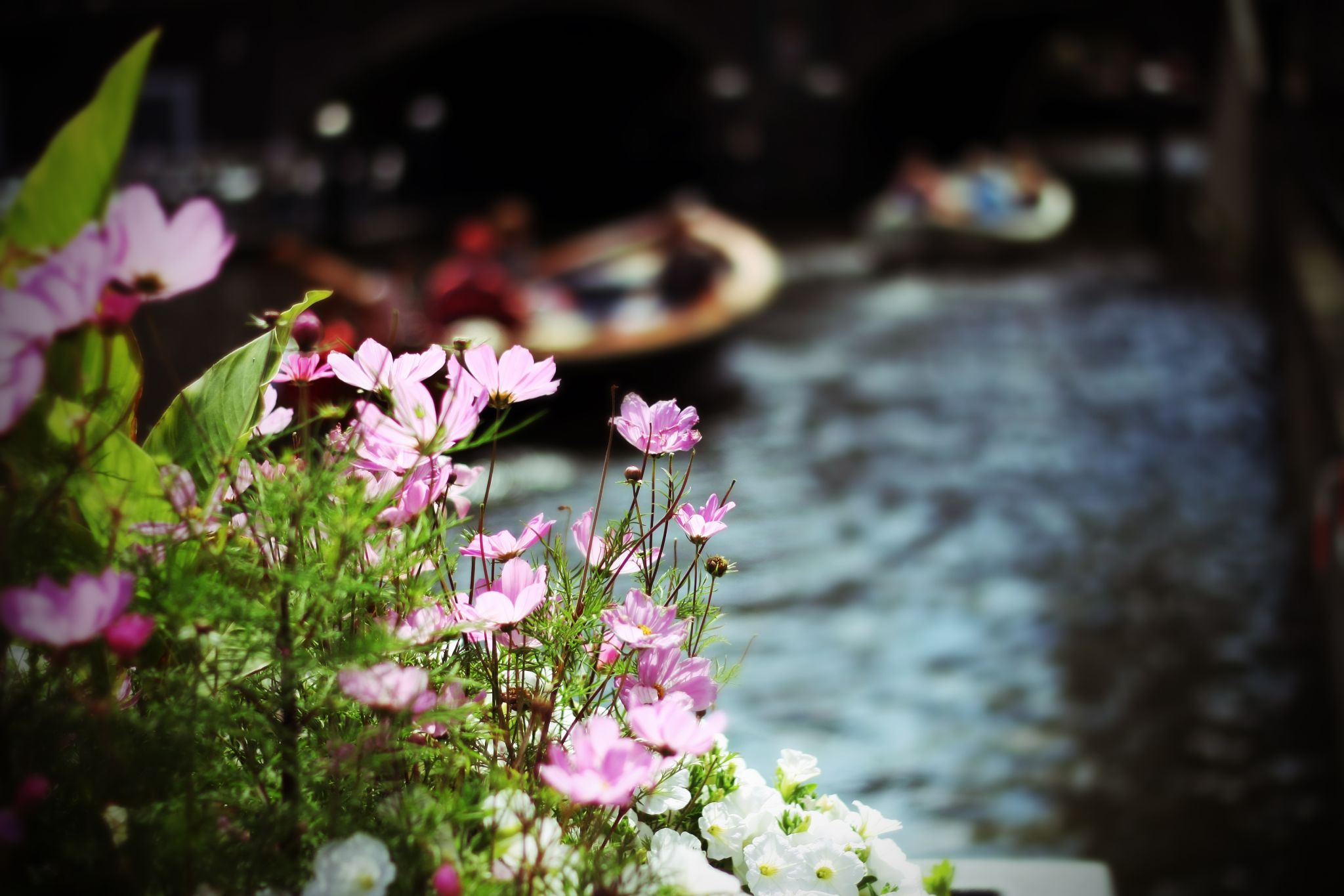 Flower & boats by Herodion Luas