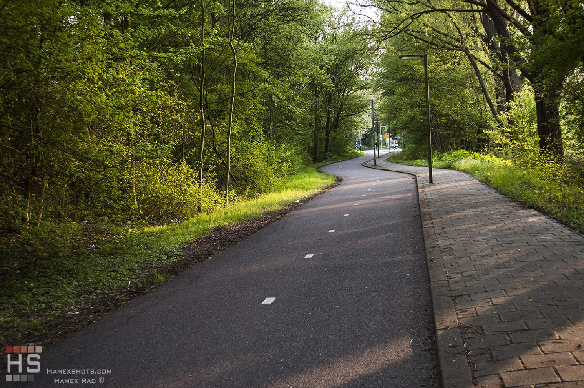 Delft bike road by Hamex Rad