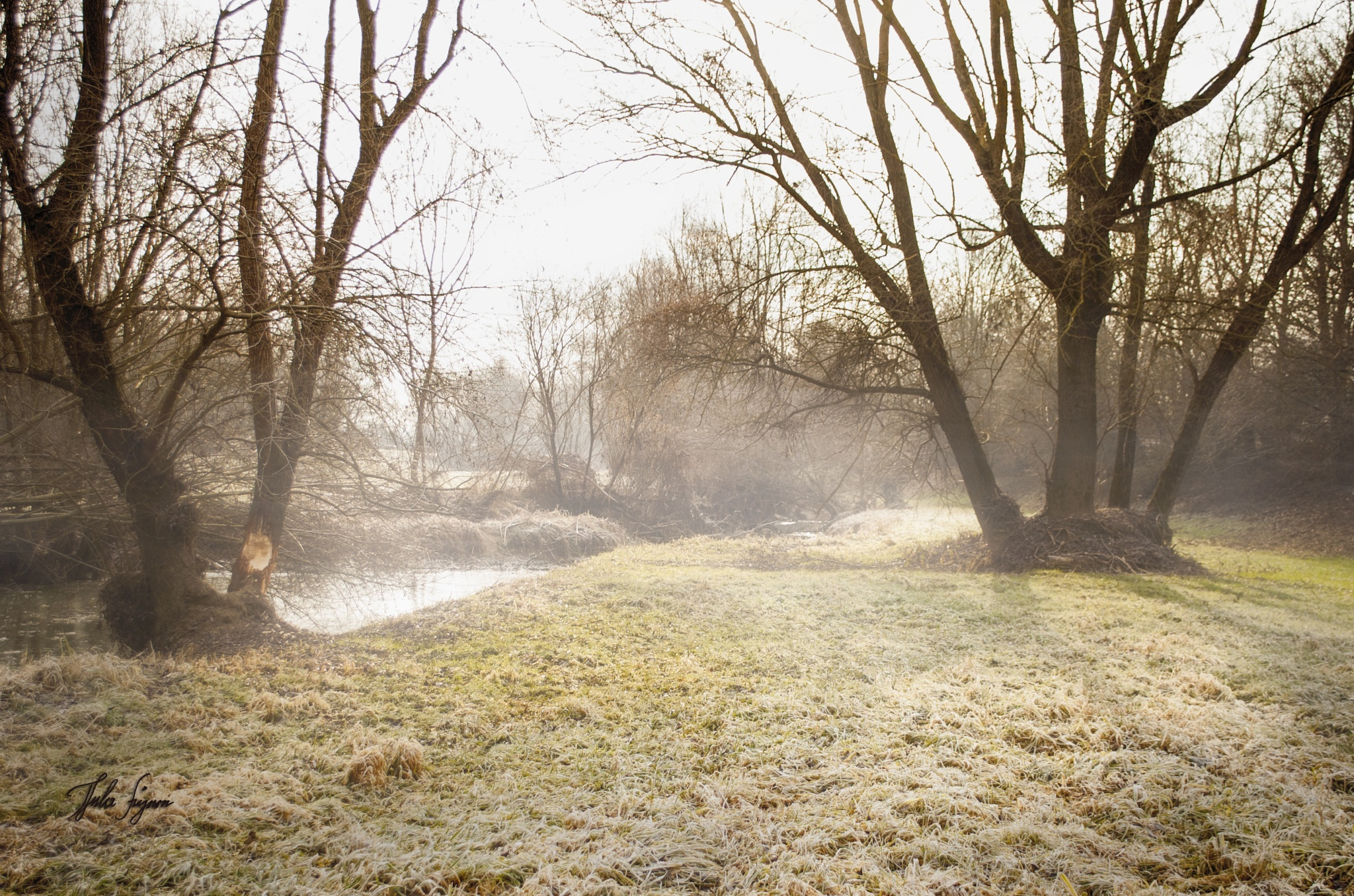 Wenn die Sonnen den Nebel auflöst by Thela Füpre