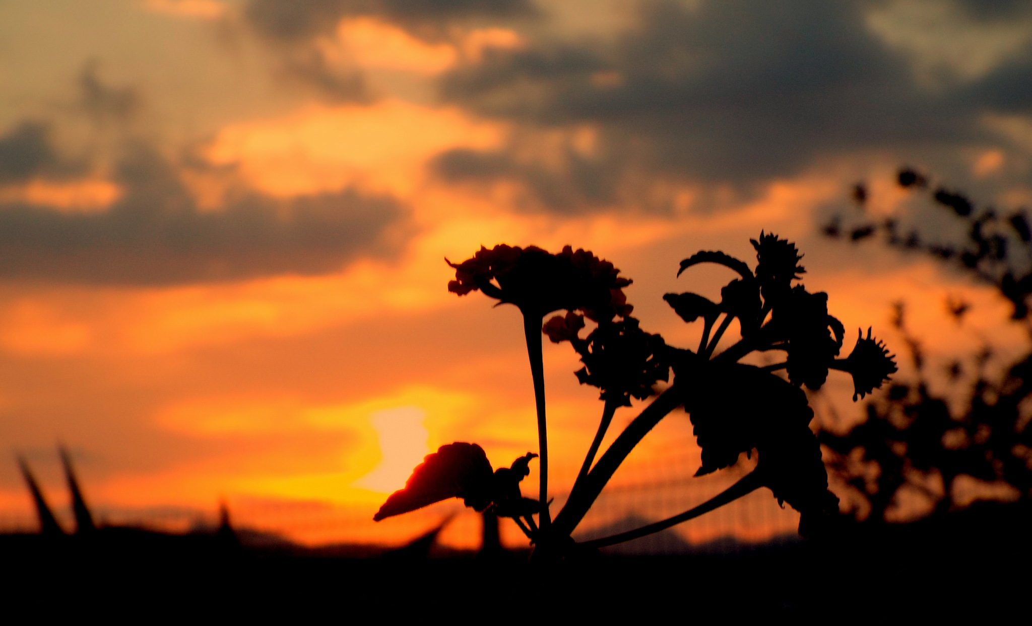 GOODBYE TO THE SUN, FULL SCREEN by Akin Saner