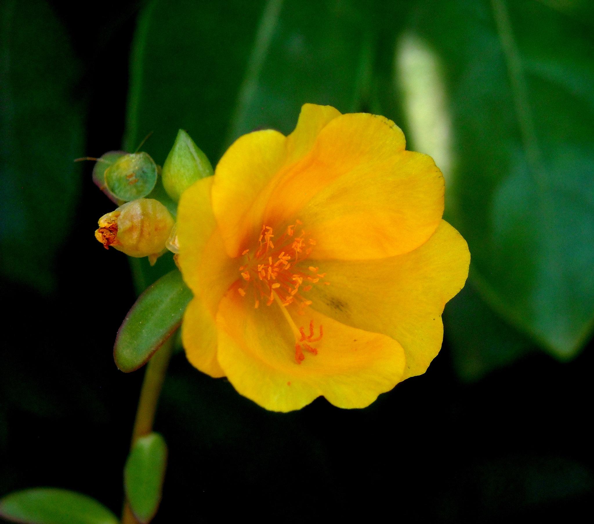 AMAZING FRESH YELLOW FLOWER        by Akin Saner
