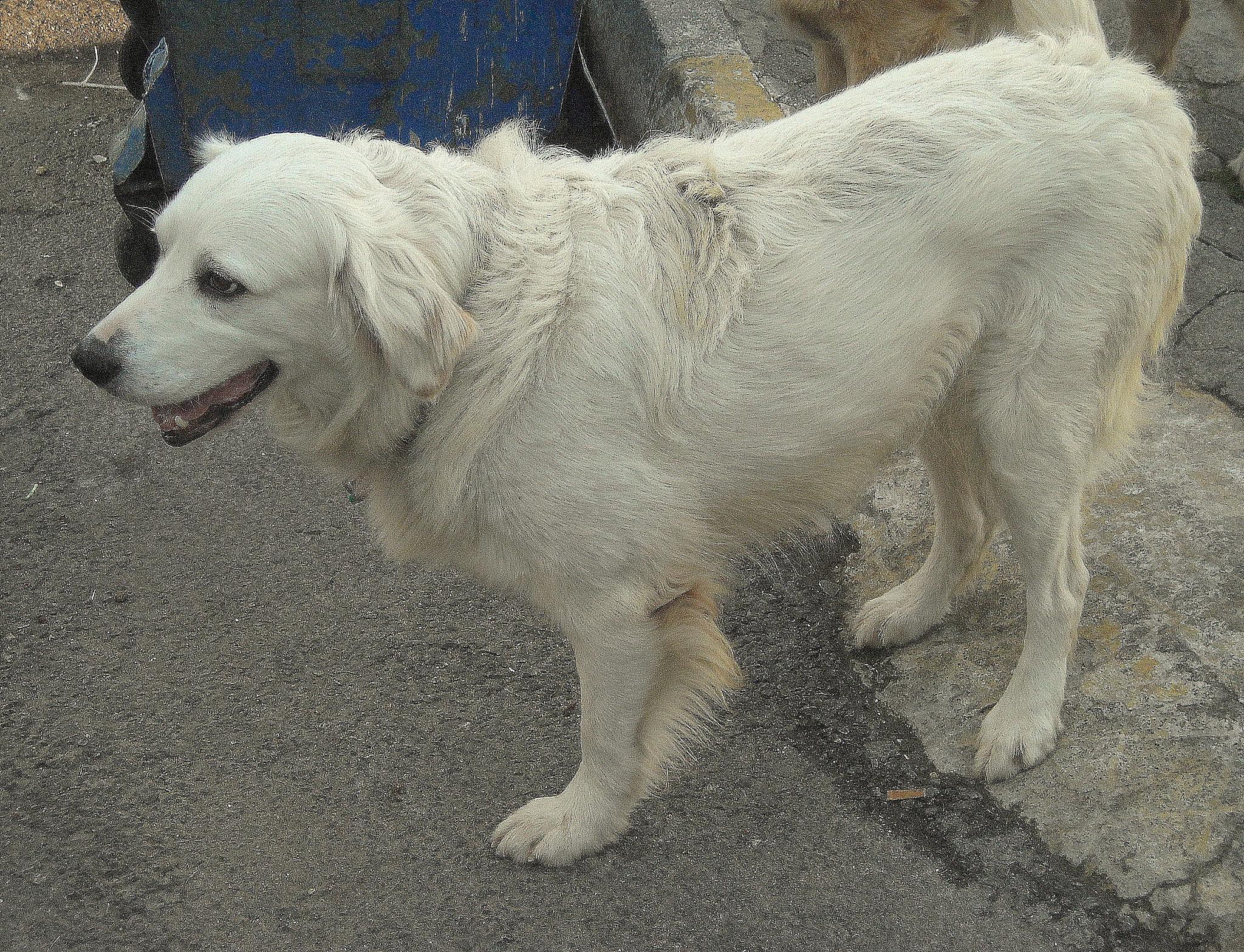 POOR SWEET DOG HAS TREE LEGS by Akin Saner