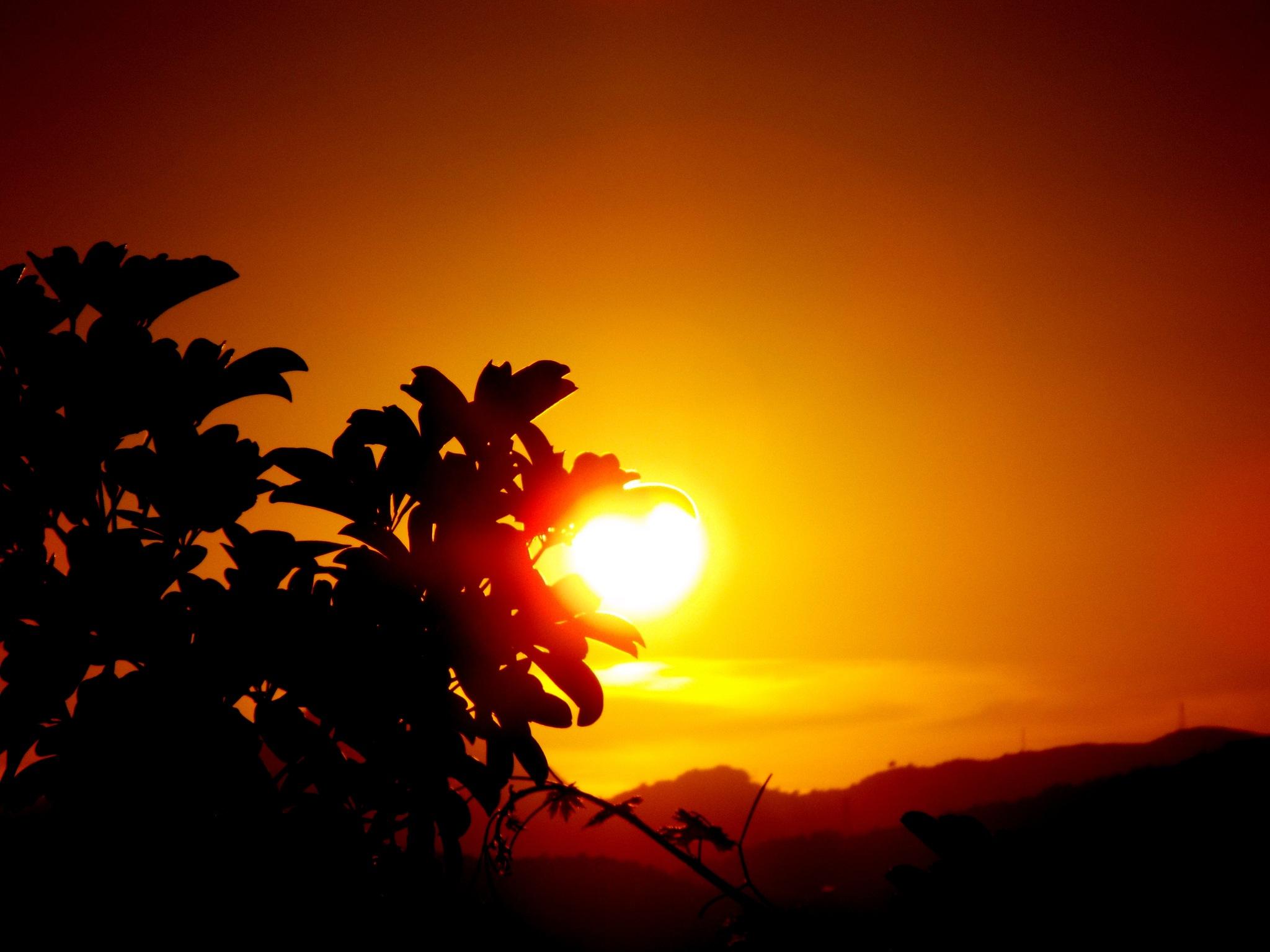 GRAPE  BUSH LEAVES CARESSING THE SUN by Akin Saner