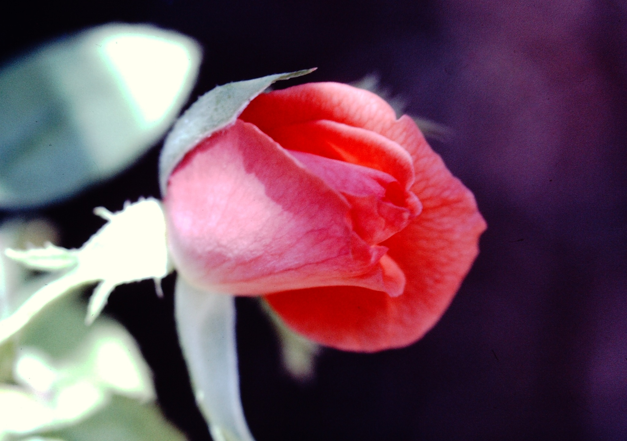 GOOD MORNING YOUPIC, FULL SCREEN by Akin Saner
