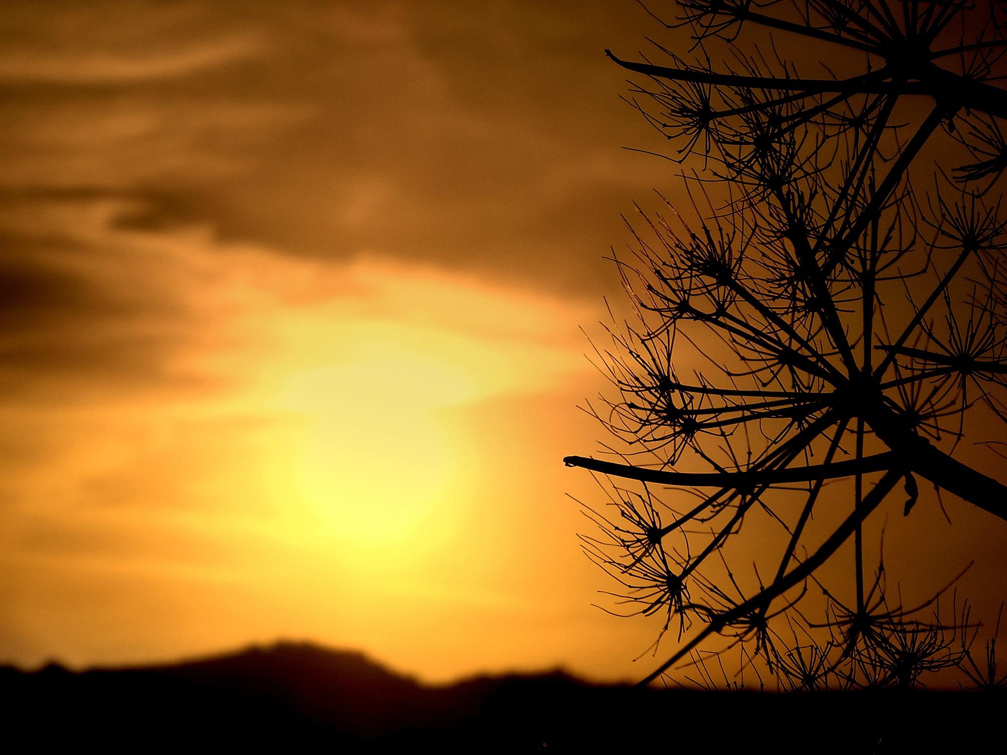 SUNSET AT BITEZ HILLS by Akin Saner