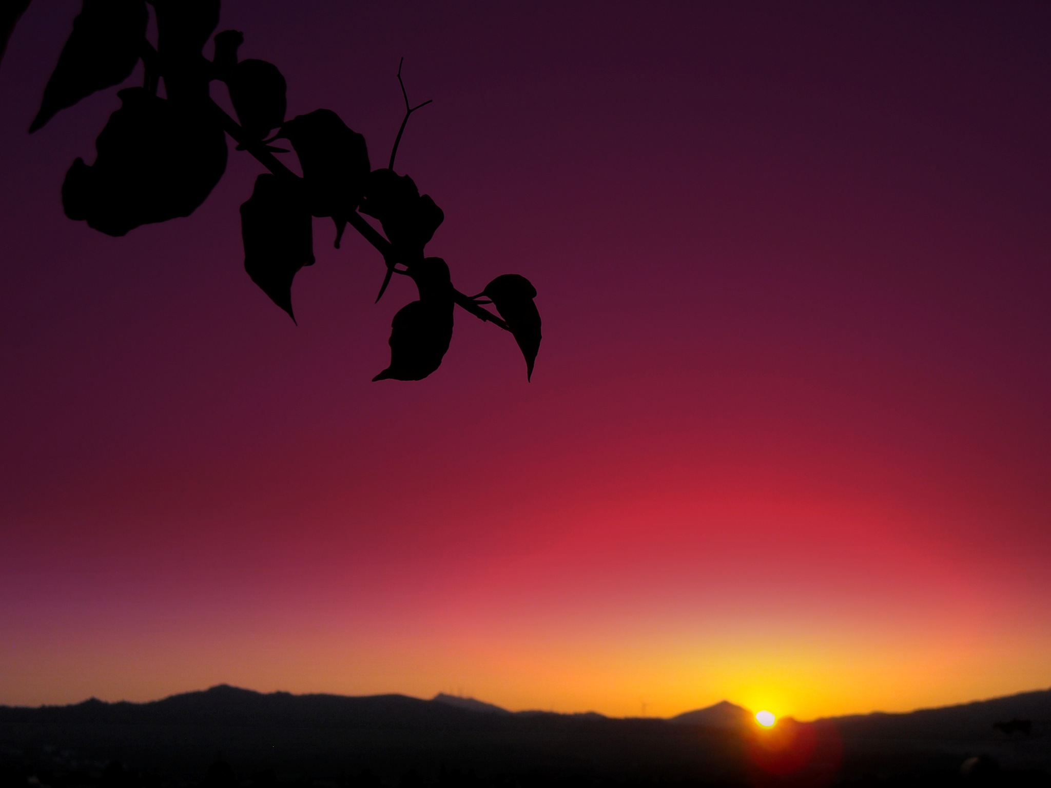 SUNSET BEHIND BEOUG0NVILLEA BRANCH by Akin Saner