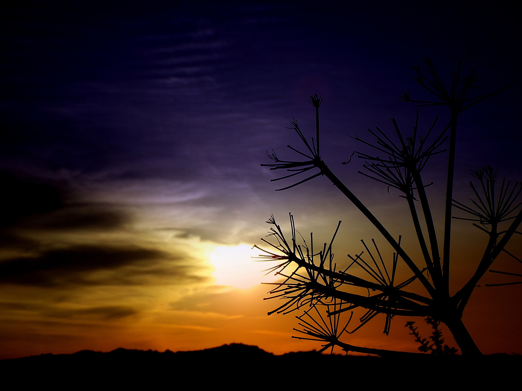 SILHOUETTES AT SUNSET 2 by Akin Saner