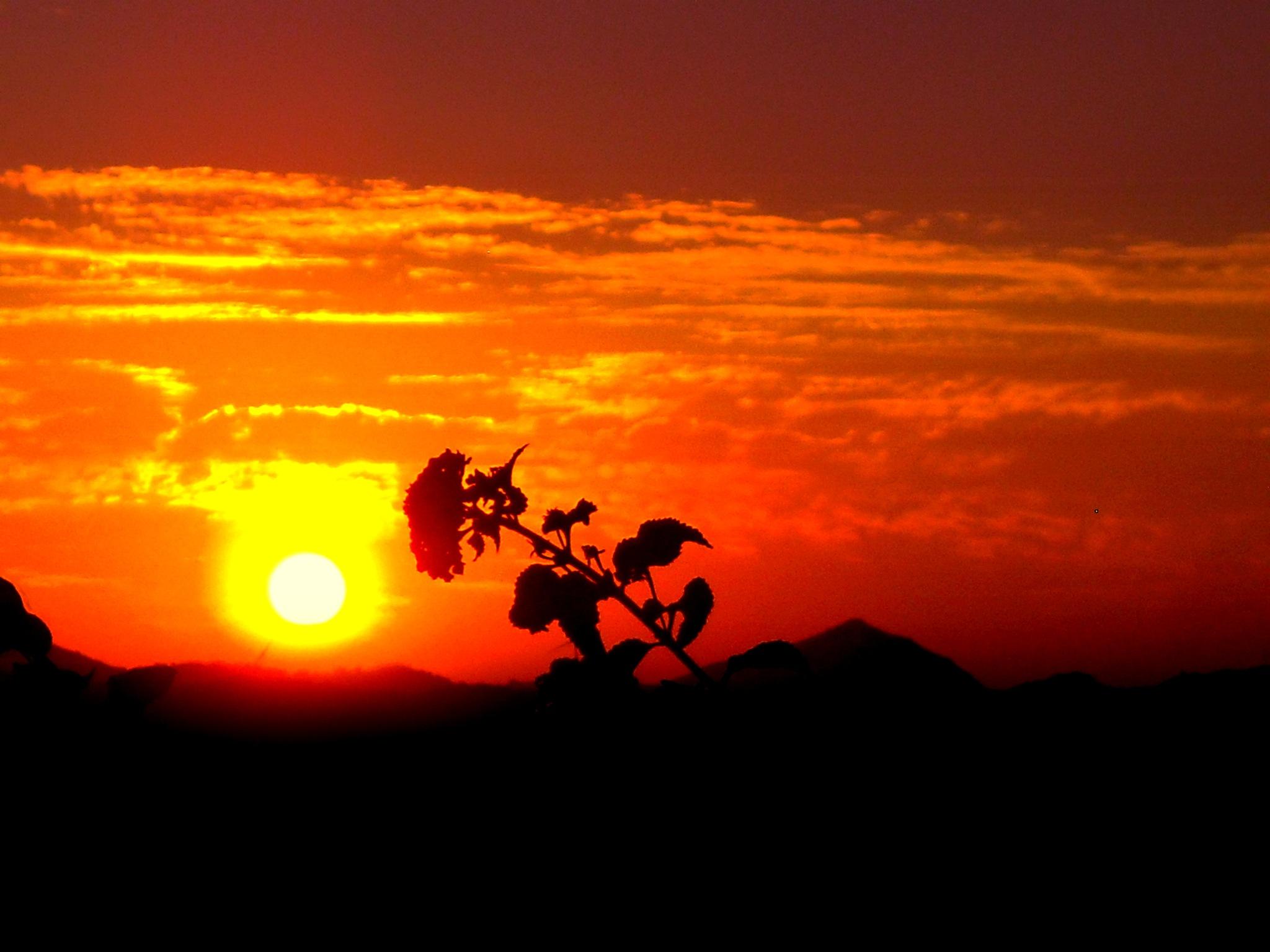UNTITLED SUNSET by Akin Saner