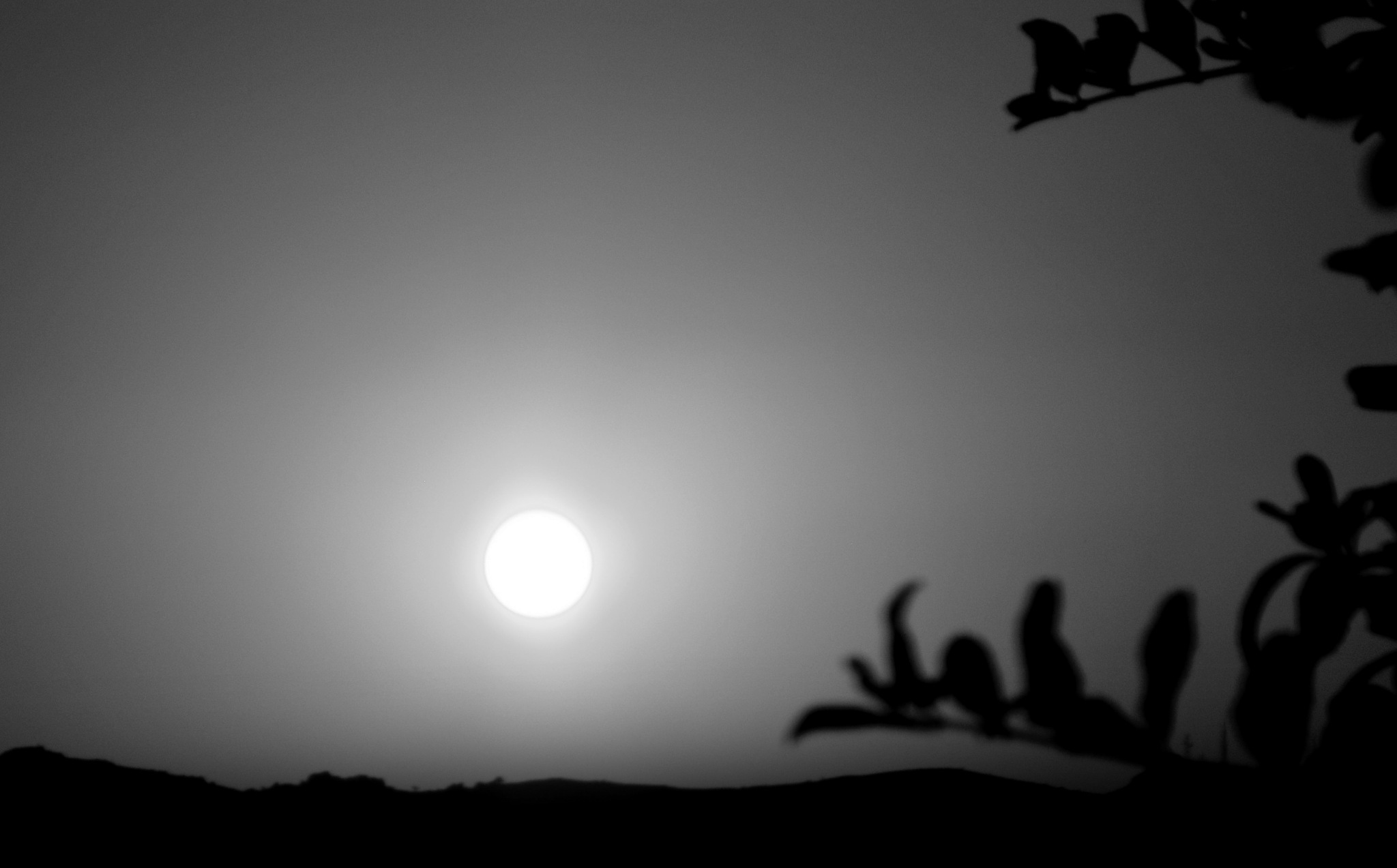 BITEZ SUNSET AND SILHOUETTES, B&W by Akin Saner