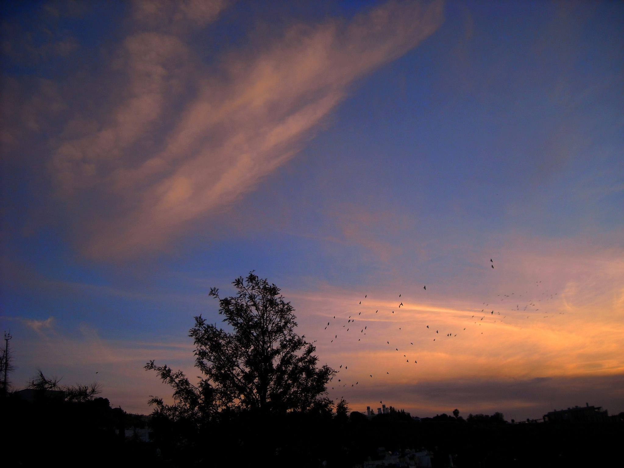 CROWS RETURN BACK AFTER SUNSET by Akin Saner