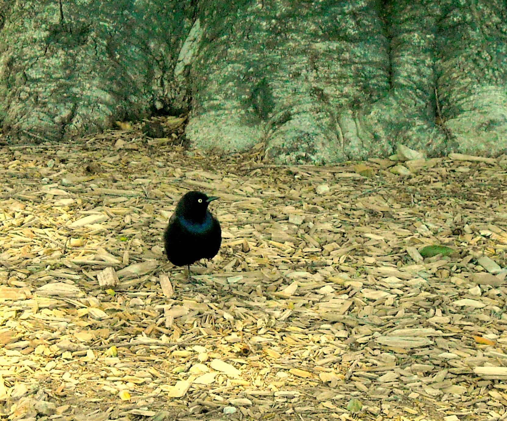 BLACK BIRD, FULL SCREEN by Akin Saner