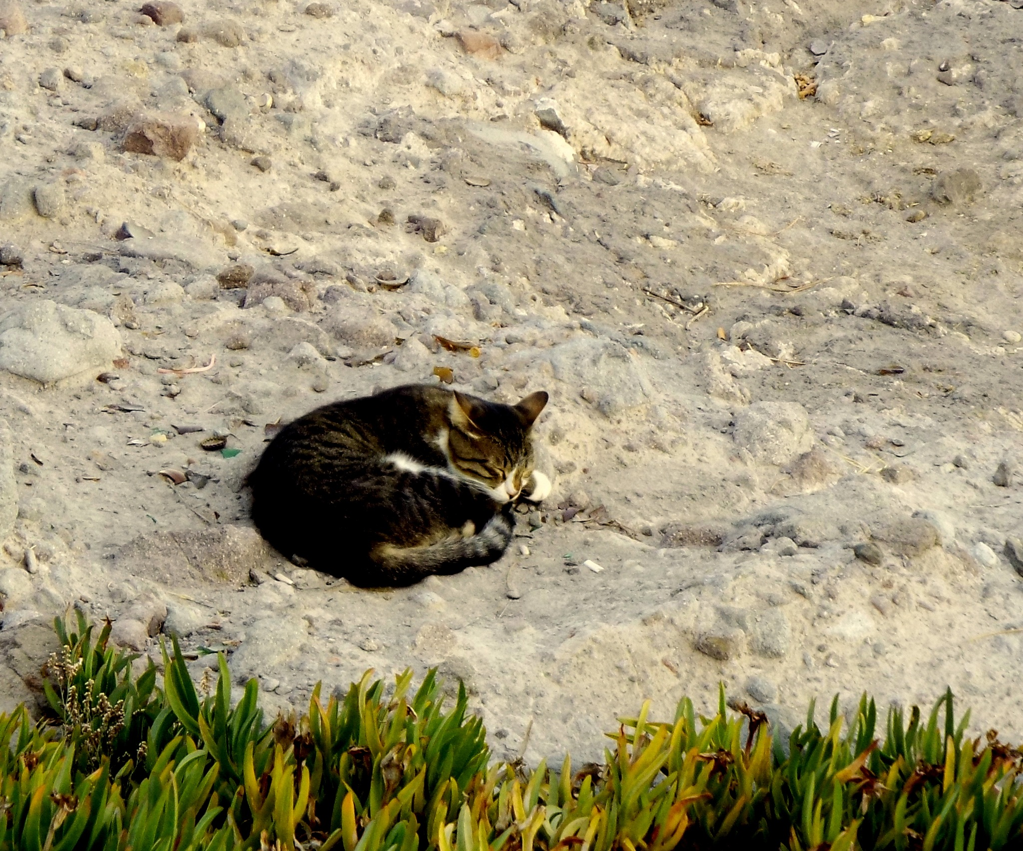 CAT ON THE ROCK by Akin Saner