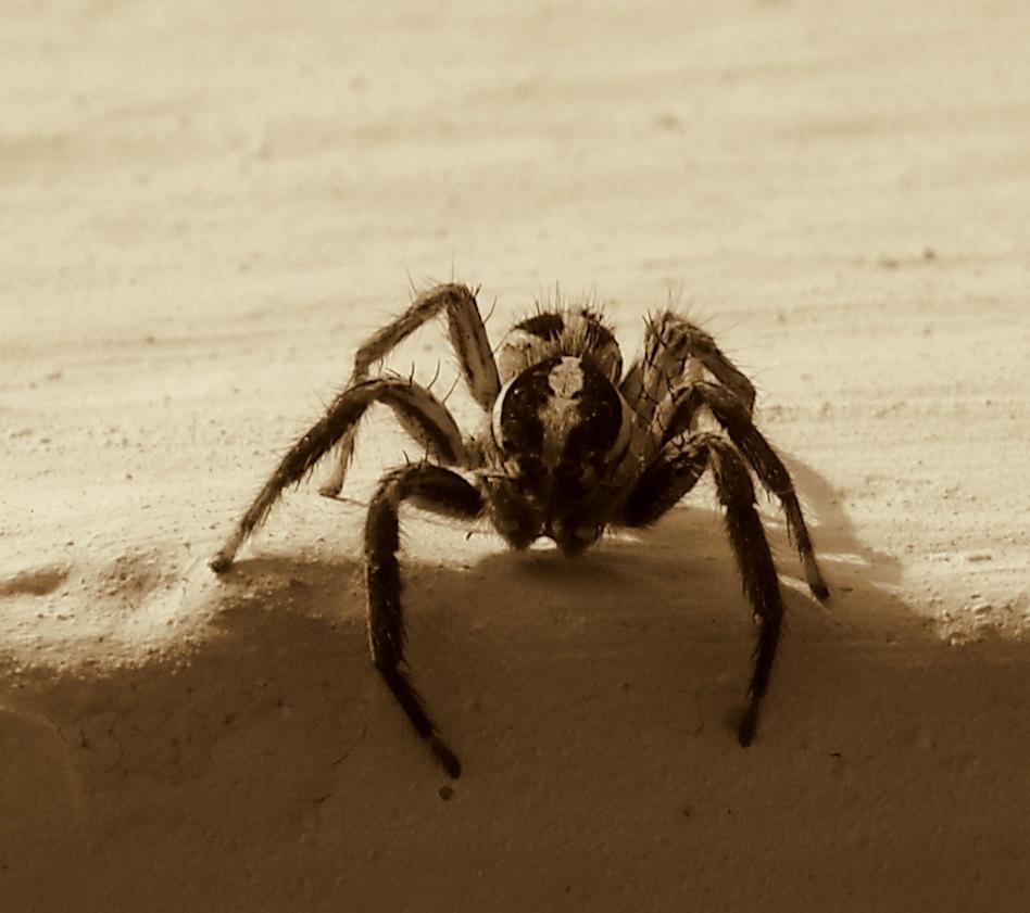 MY LITTLE JUMPING SPIDER by Akin Saner